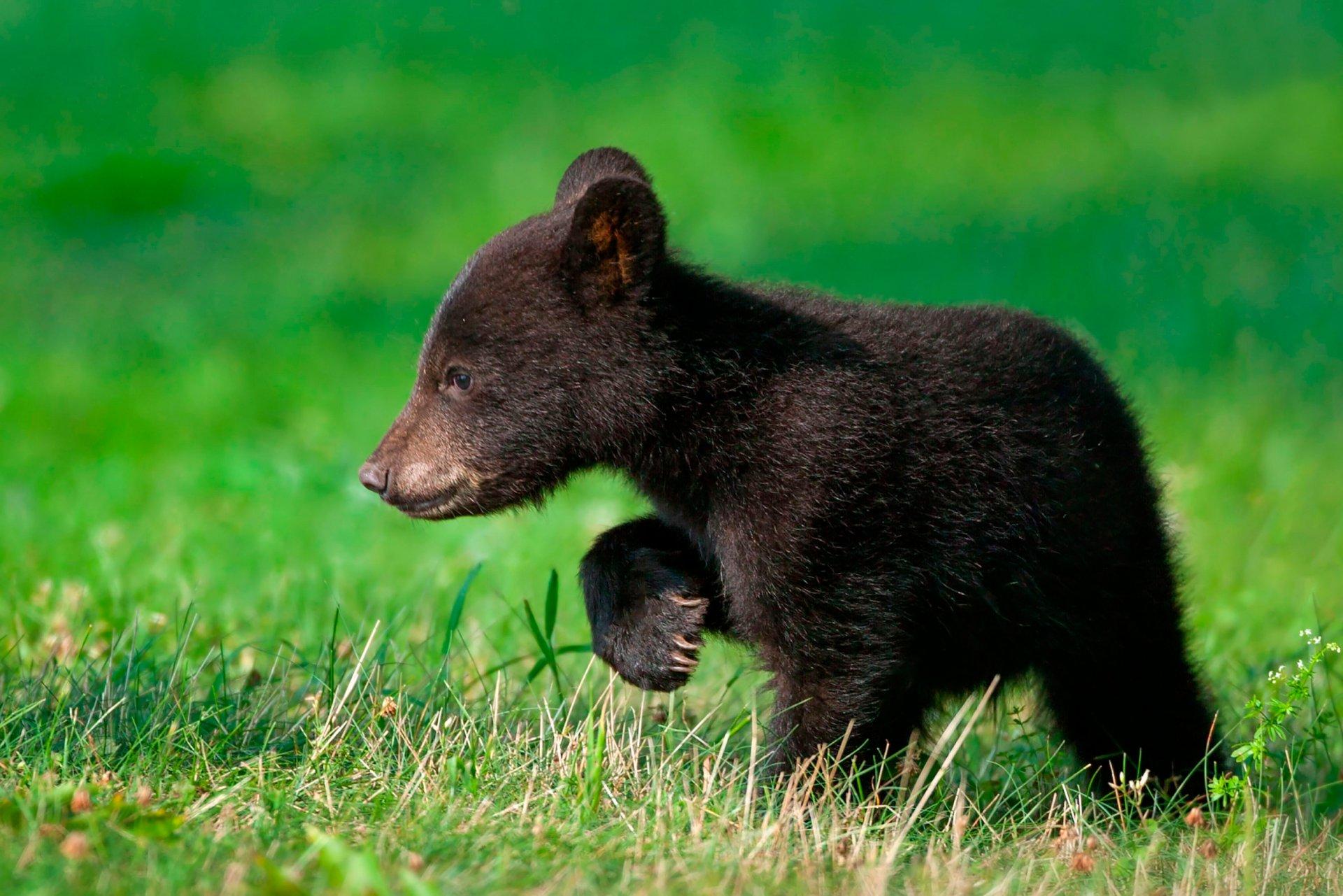 Открытка, медвежата в картинках