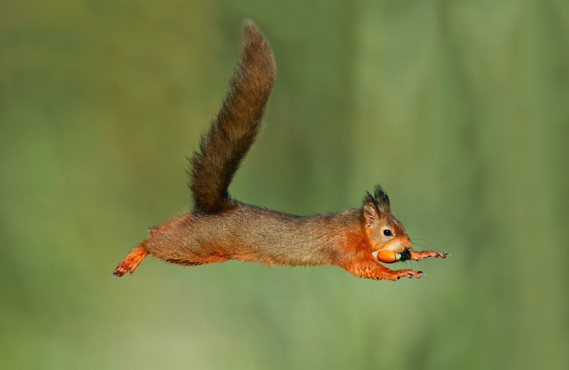 уже выпустили белки которые летают фото побегов гибнет молодом