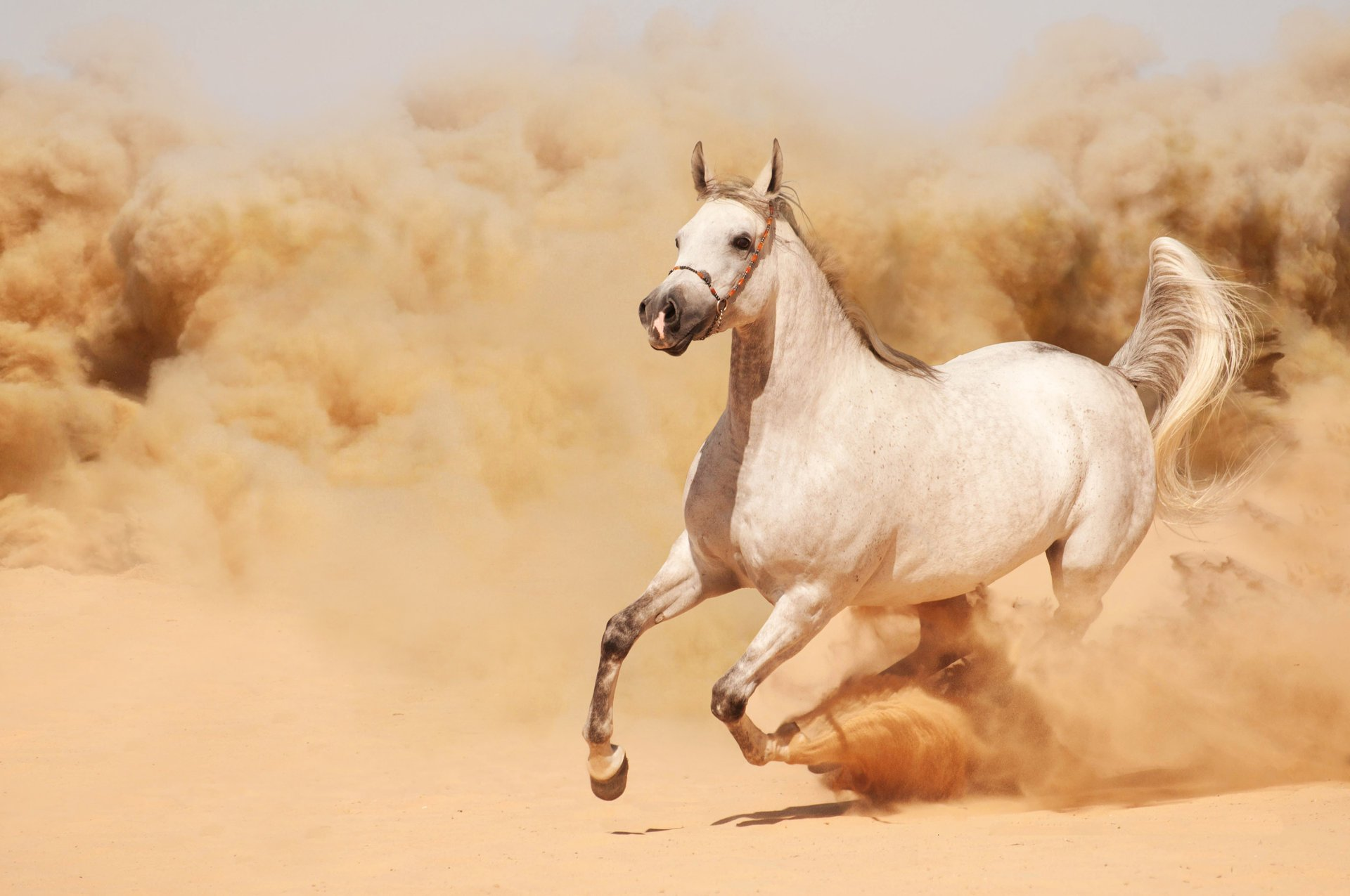 Картинка с изображением лошади