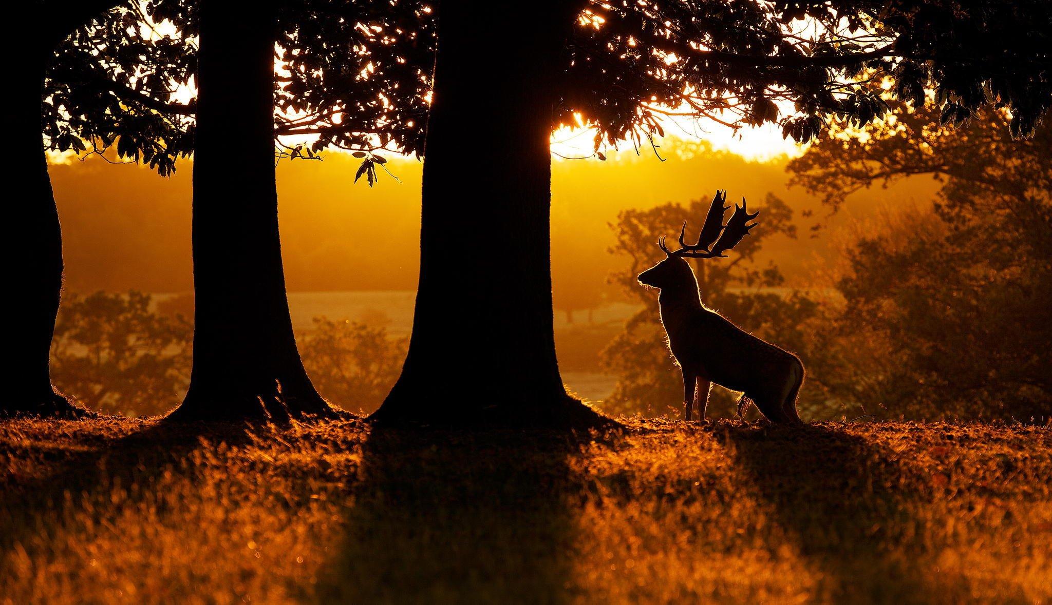 природа лес олень животное деревья без смс