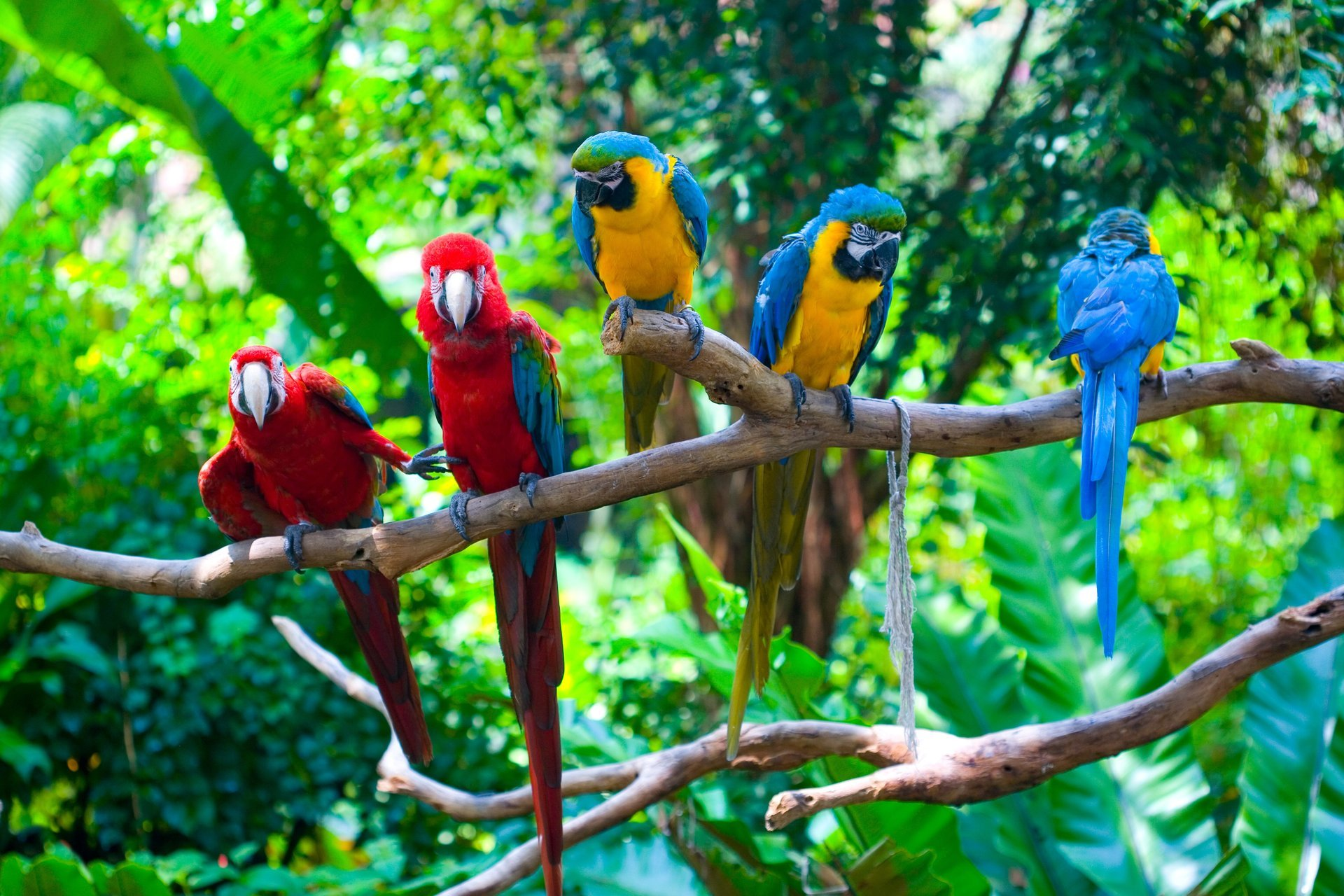 воровали птицы качественные фото обоих