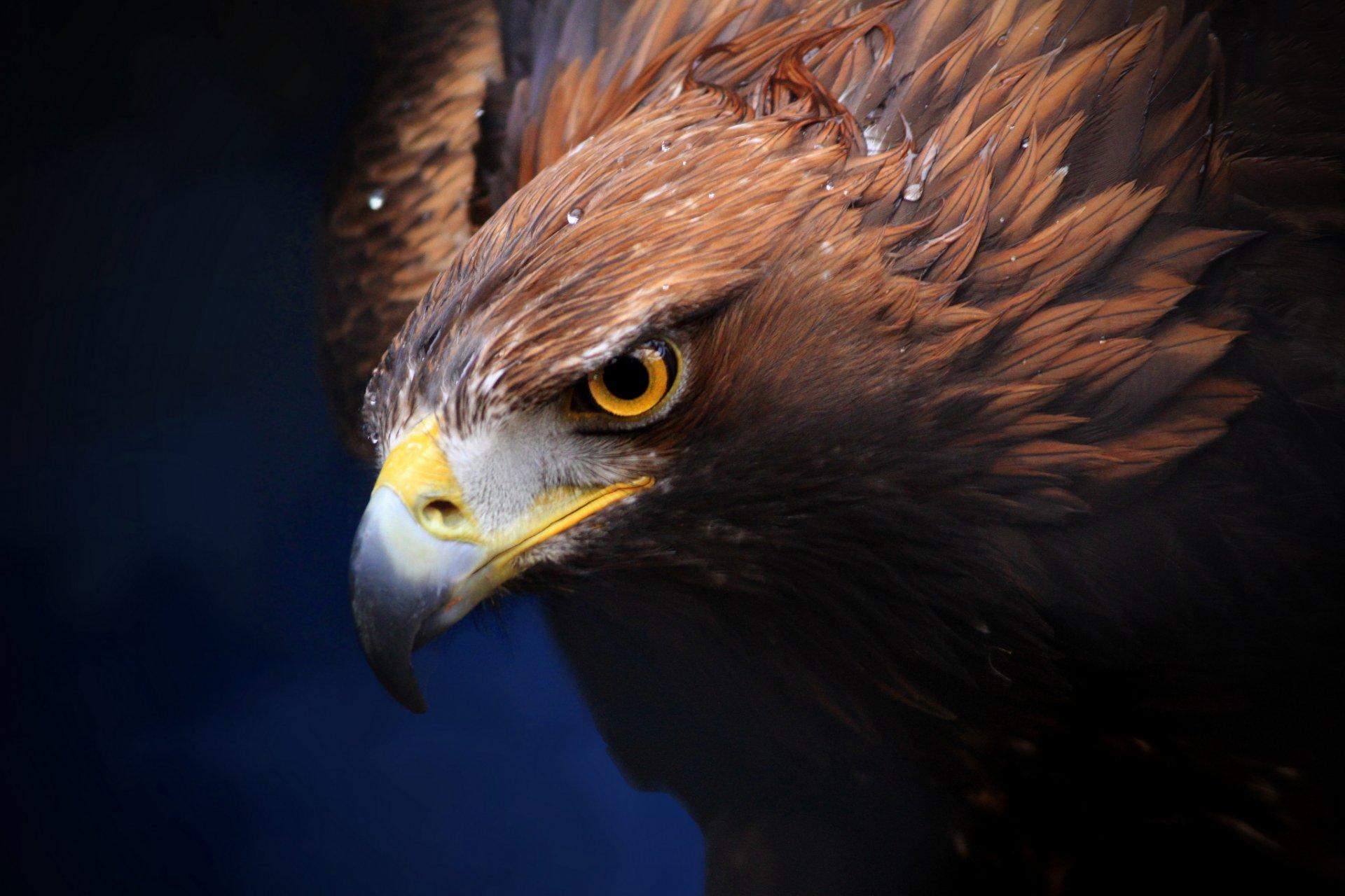 захода картинка орел который есть частности заметили, что