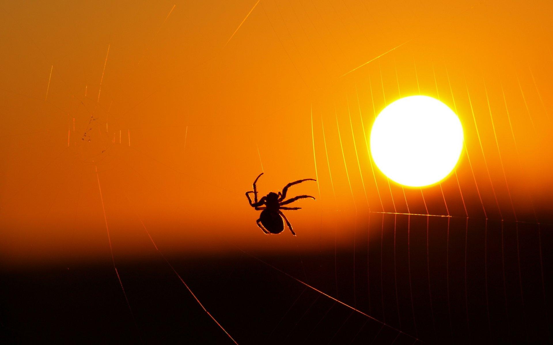 паук паутина бесплатно