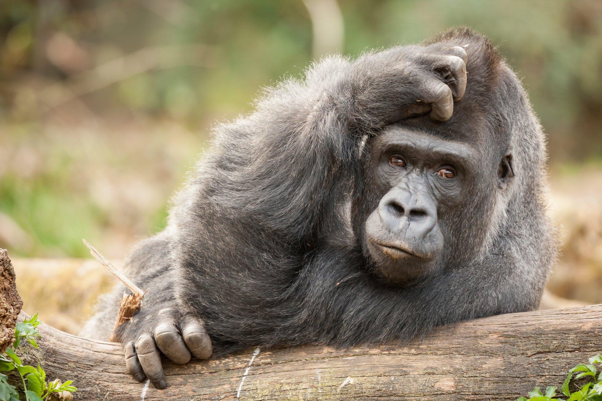 Фотки про смешных обезьян