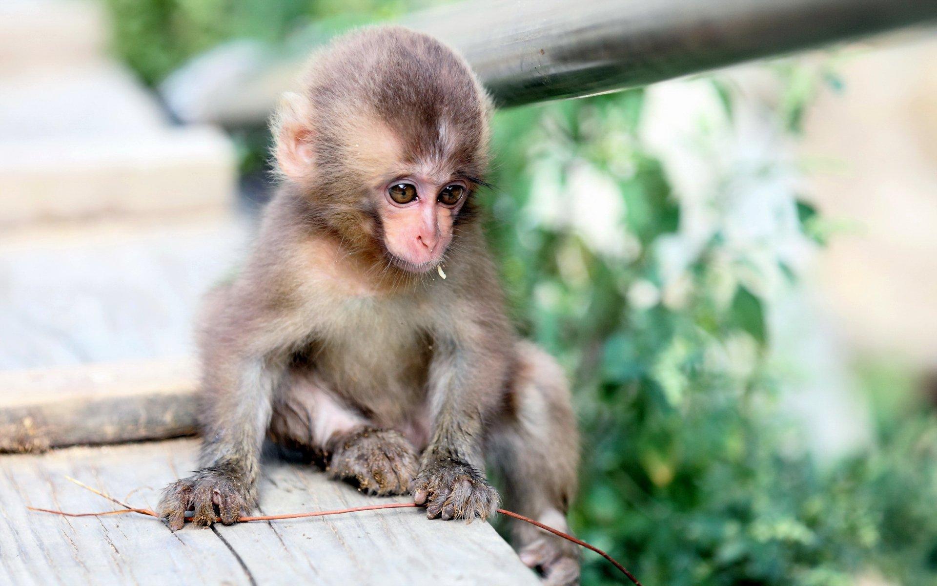 обезьянка в картинках фото фото