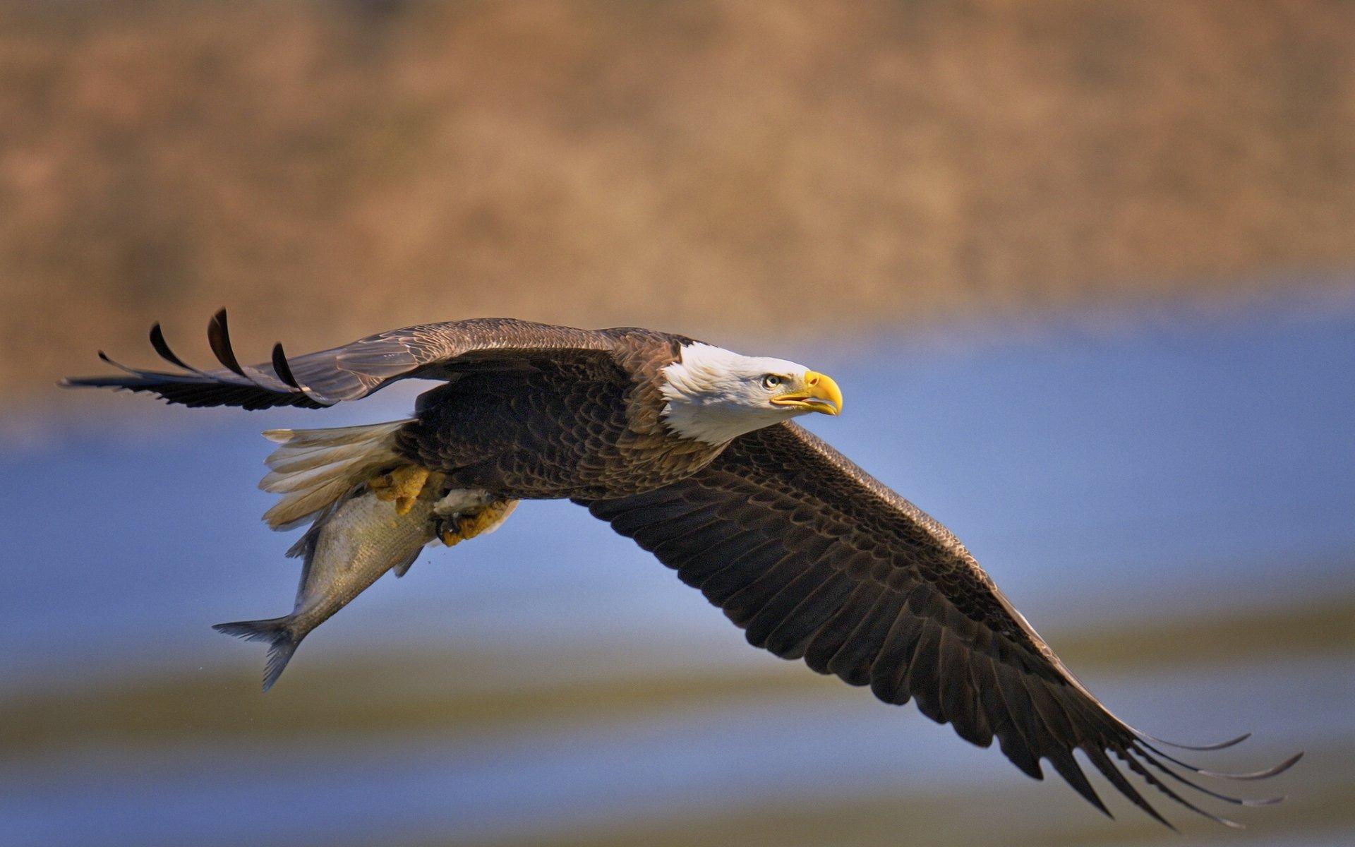 картинка орел который есть говорит, начертил