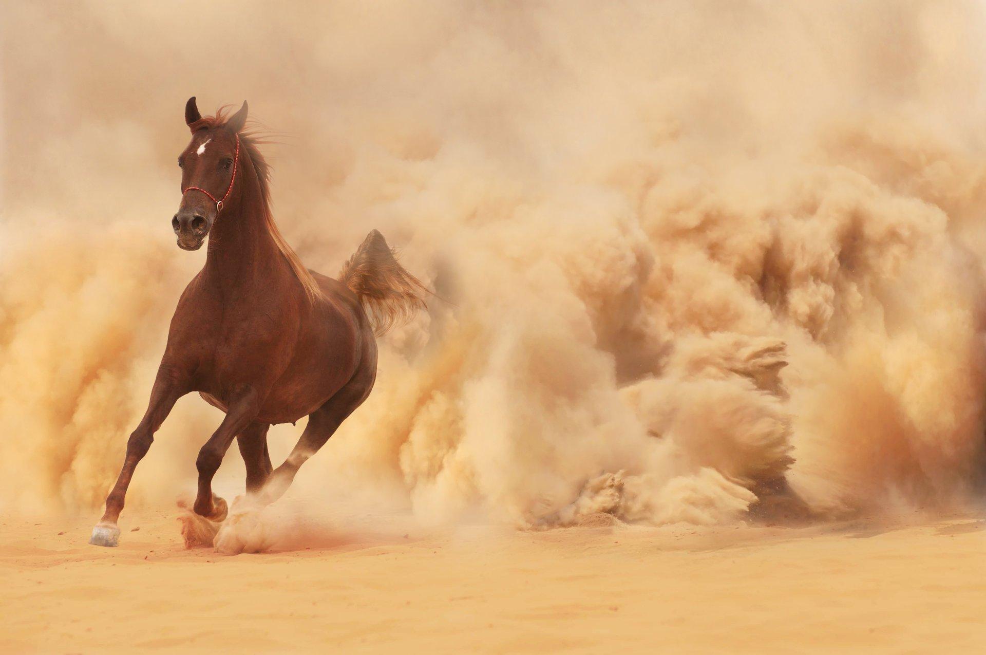 филе картинки убегаю от коня перуна вот все