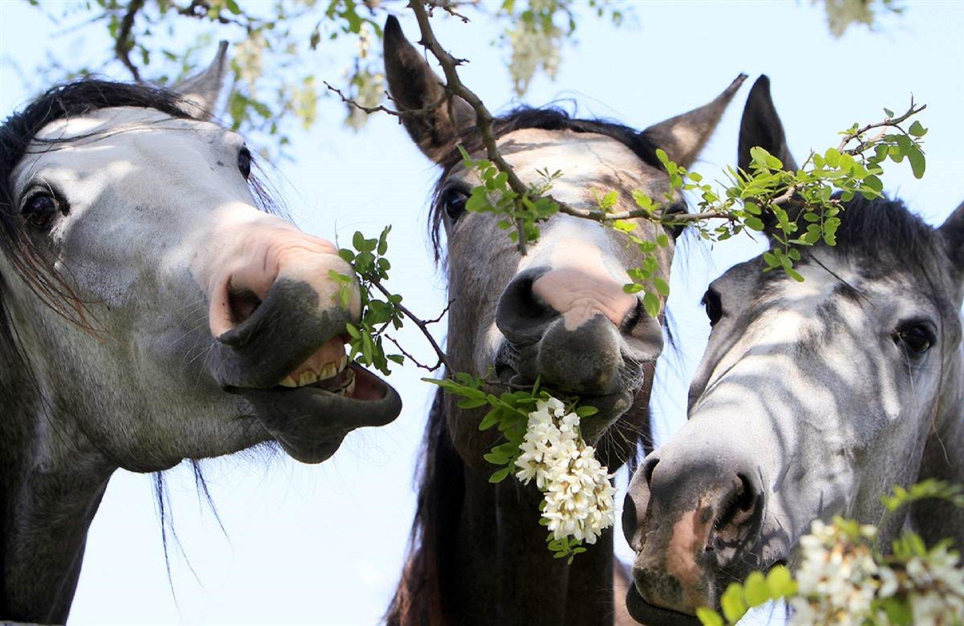 Книги, картинки смешные лошадки