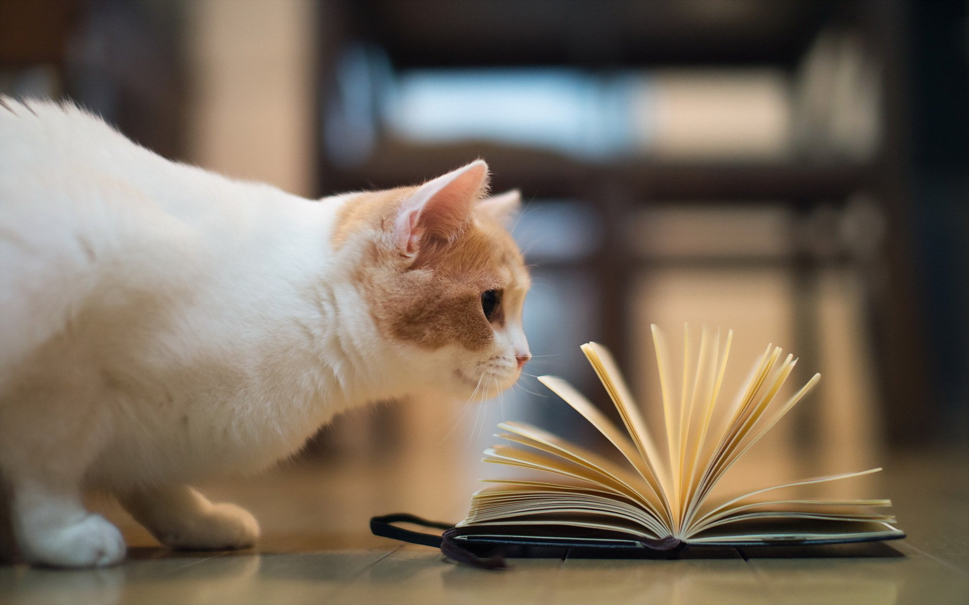 кот на полке cat on the shelf  № 1697994 без смс