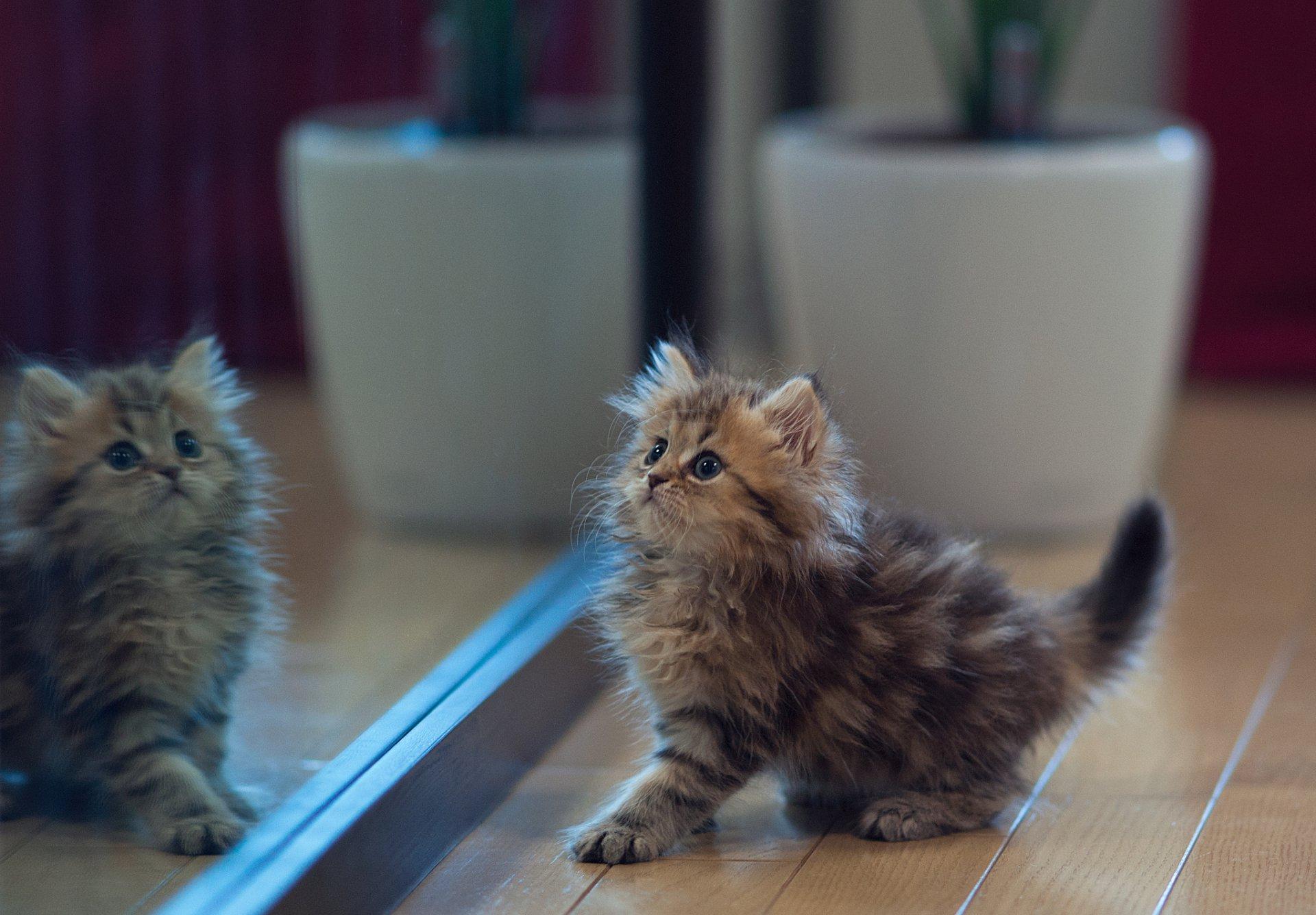 Картинки красивых котят пушистых
