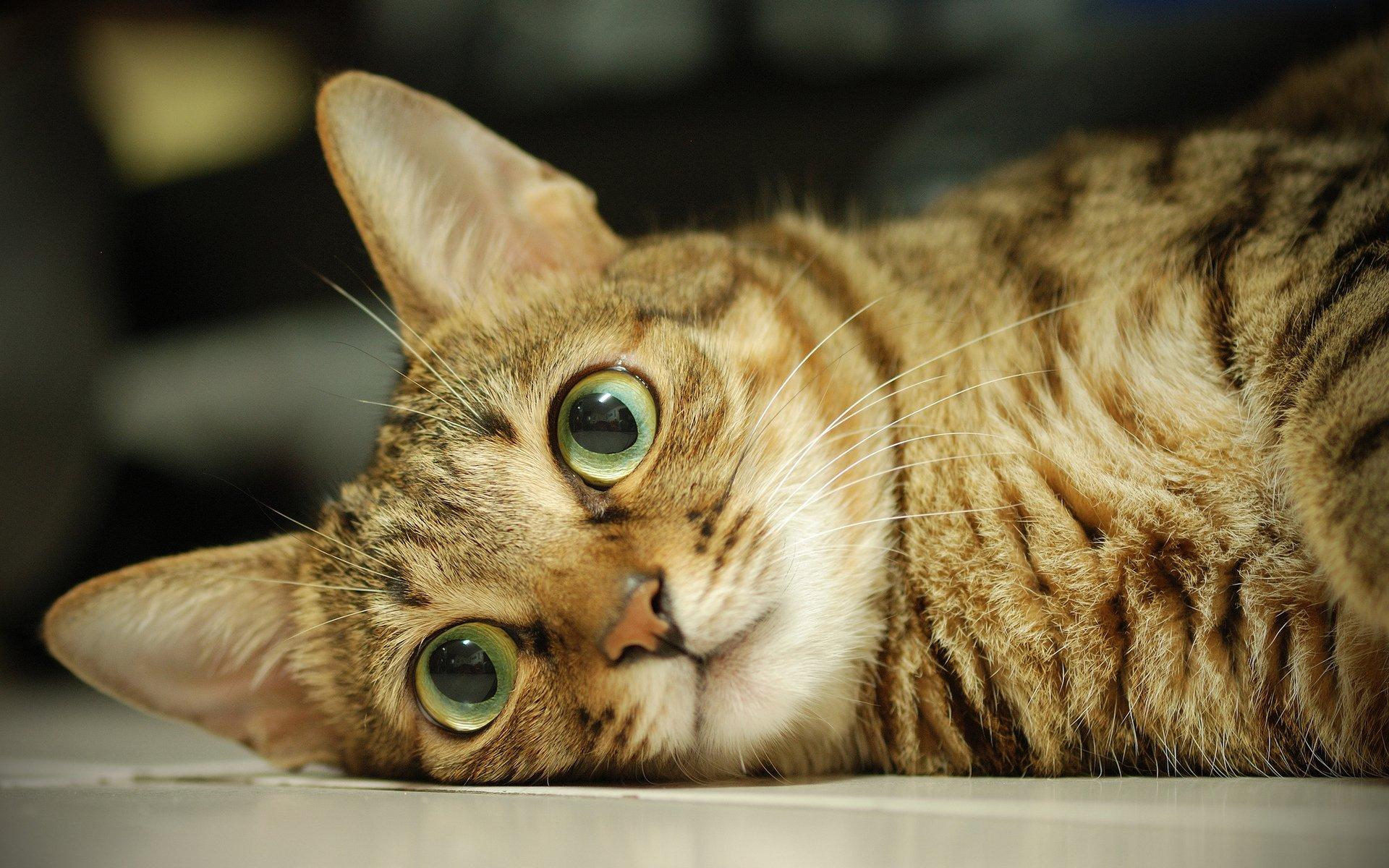 Картинки с глазами котика