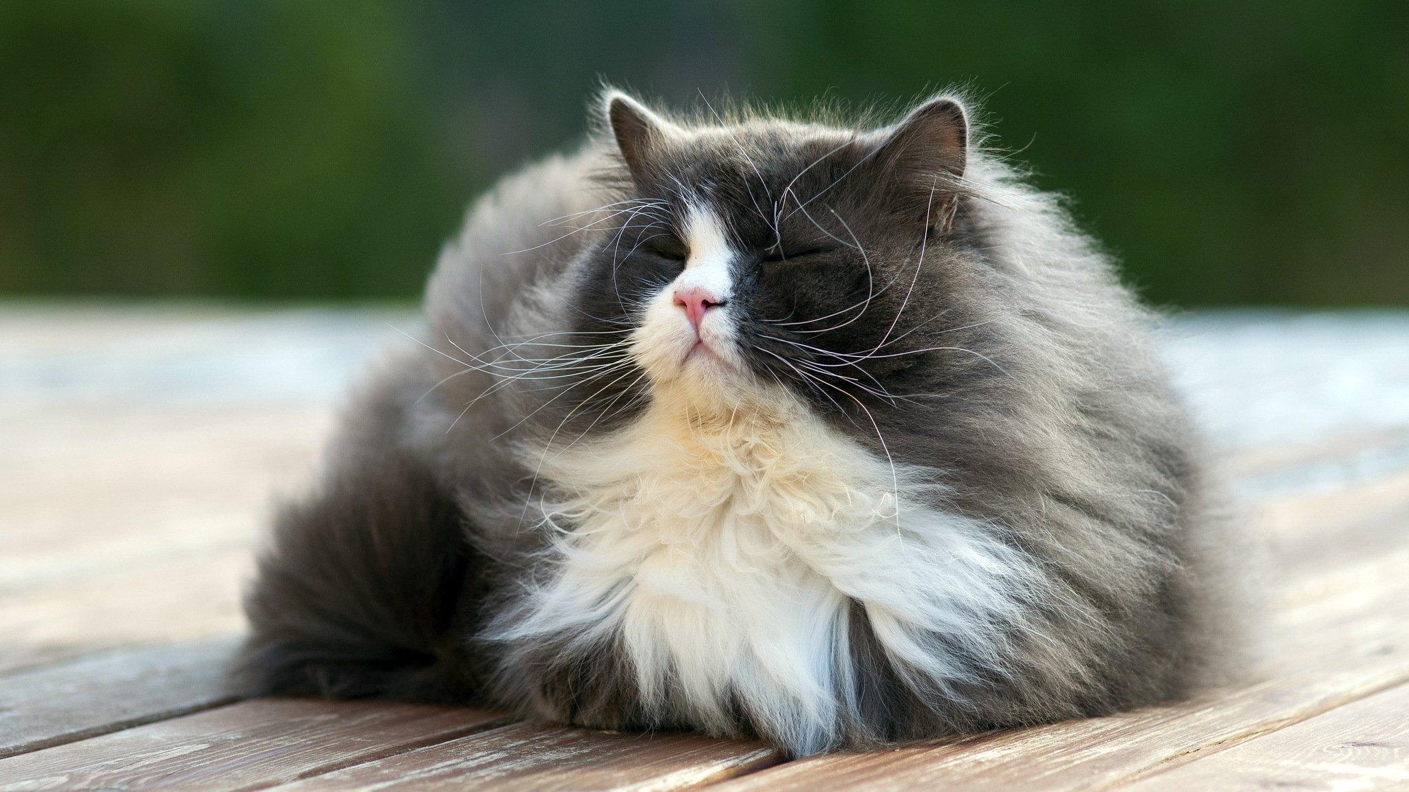 Картинки красивые кошки пушистые, открытки картинки надписями