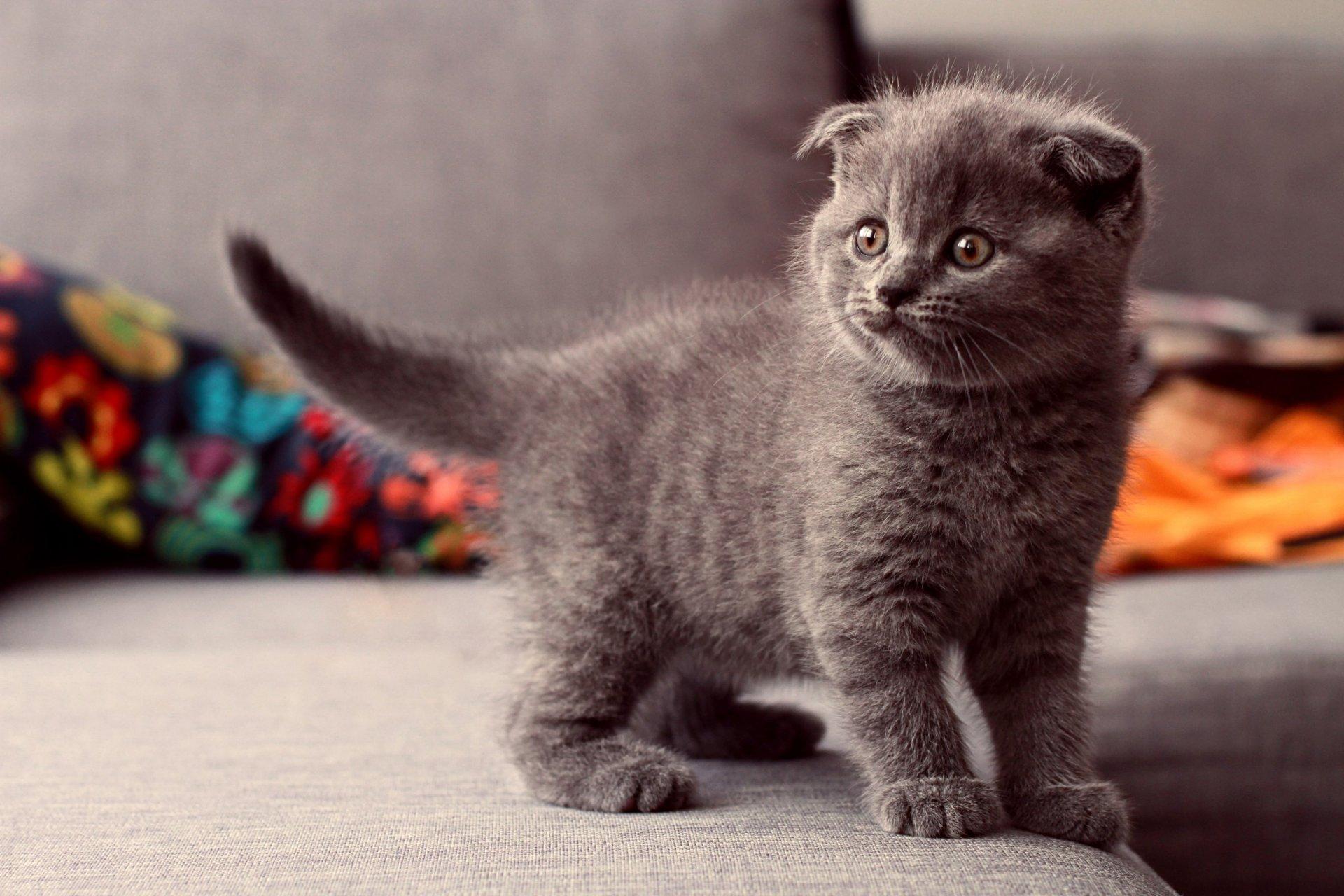 картинки на телефон котята вислоухие такая елочная игрушка