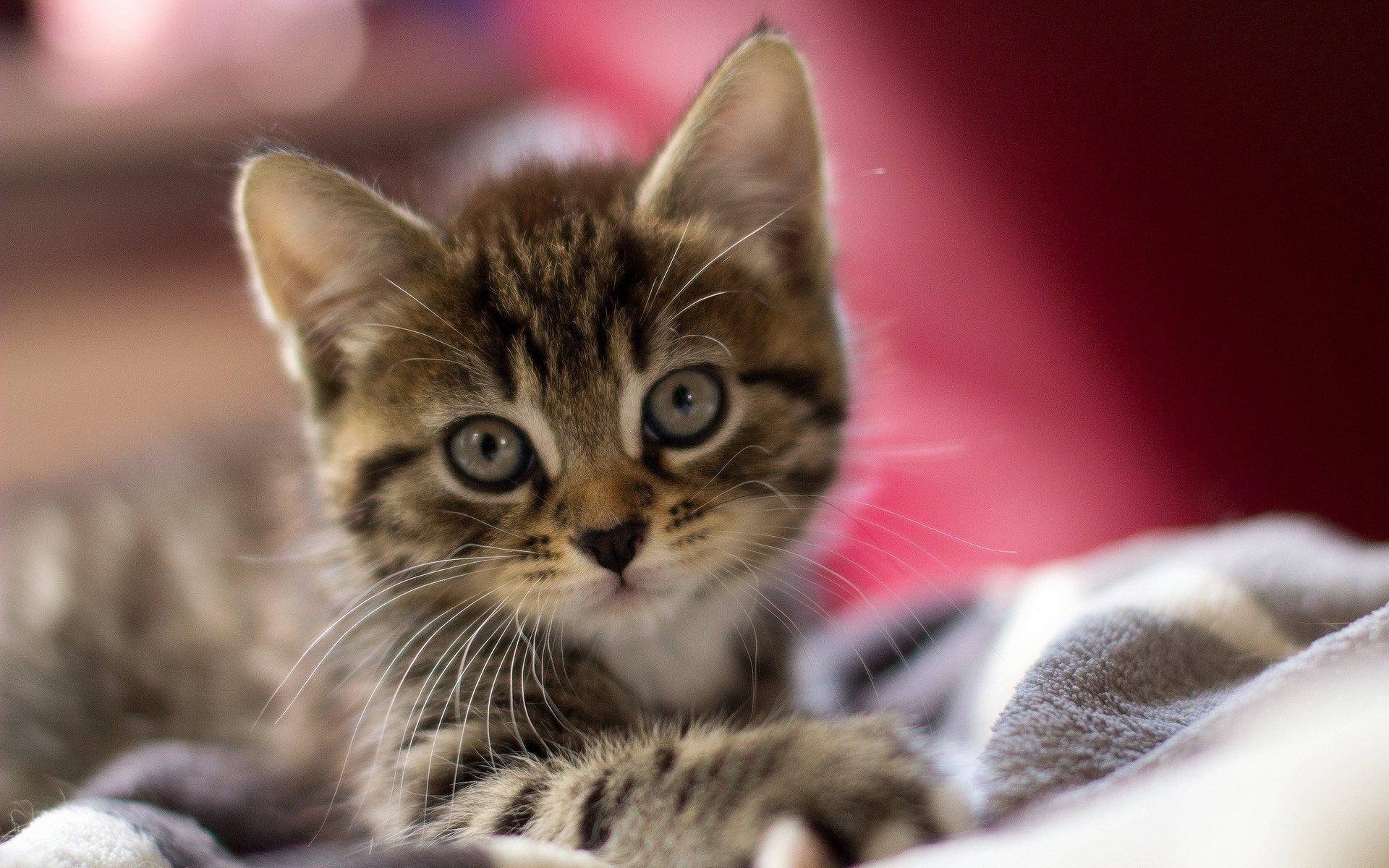 Котенок на плече  № 1126950 загрузить