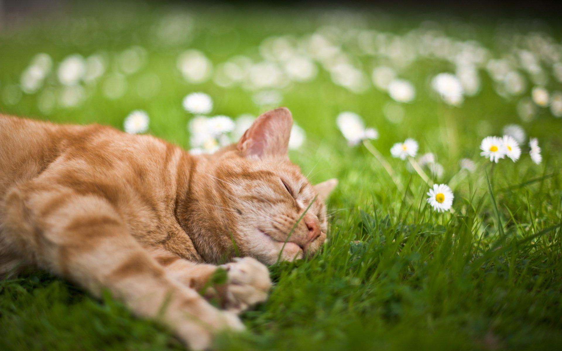постоянная картинки забавные кошки летом так можно избежать
