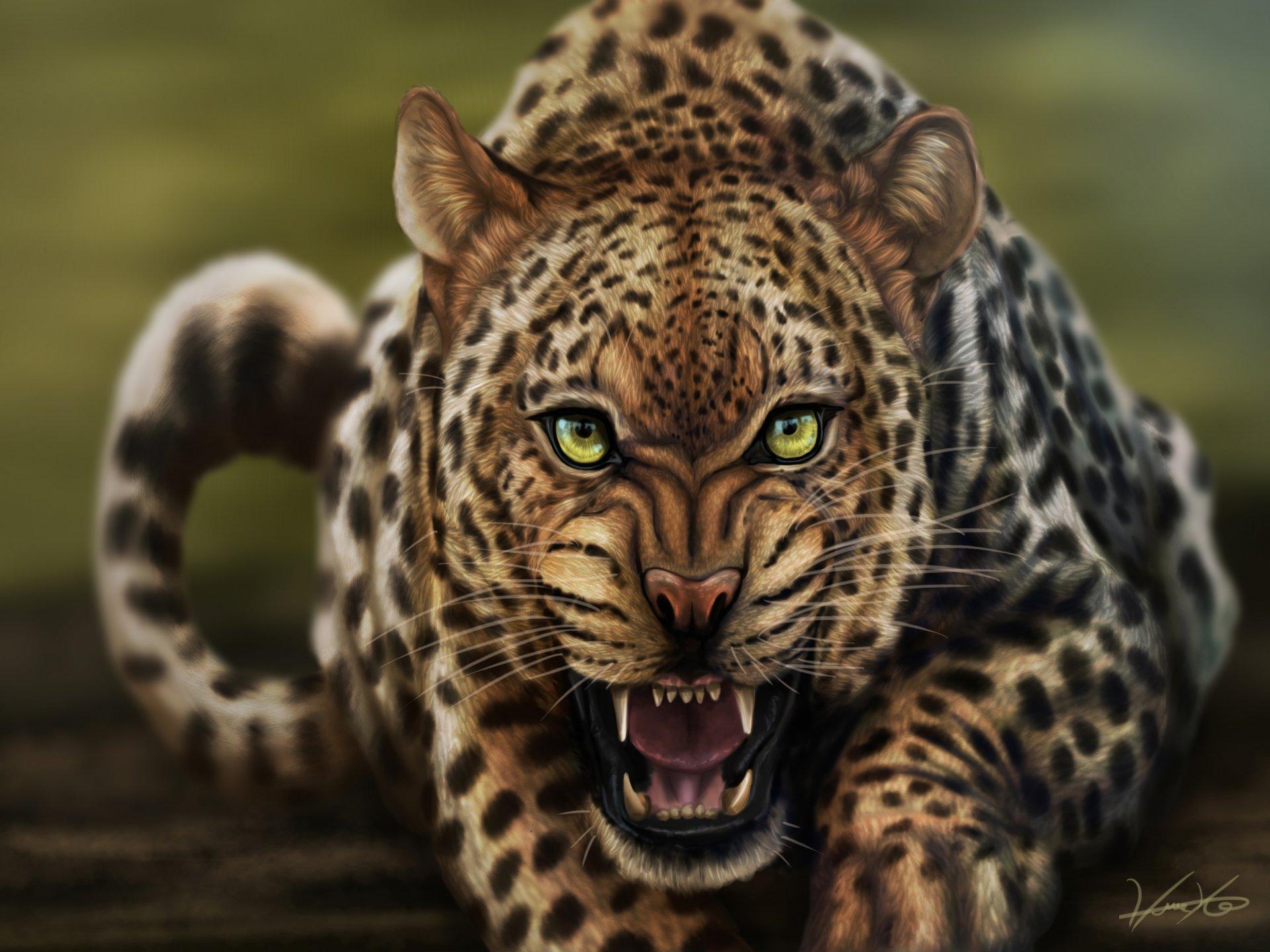 Обои леопард, Кошка, морда. Кошки foto 16
