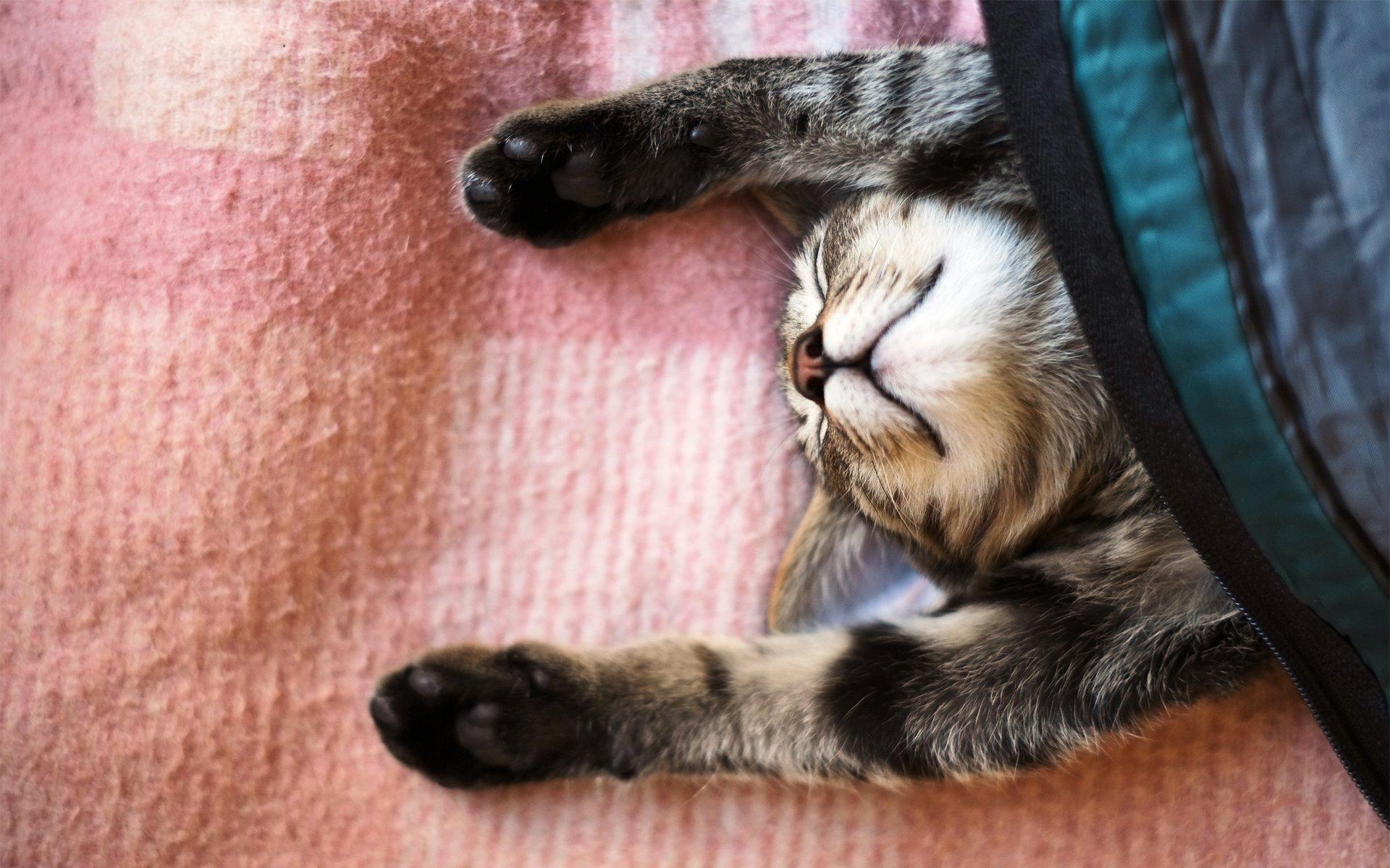 Кошка с розовыми когтями бесплатно