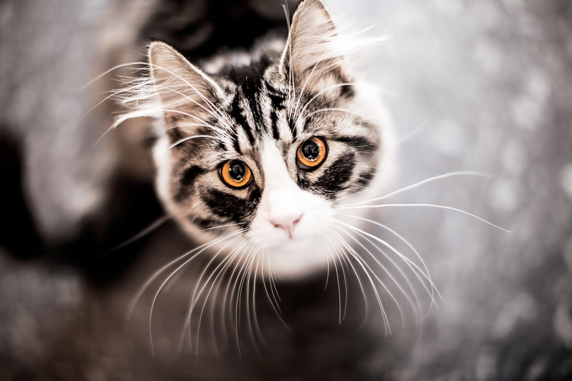 Прикольные мордочки котят картинки