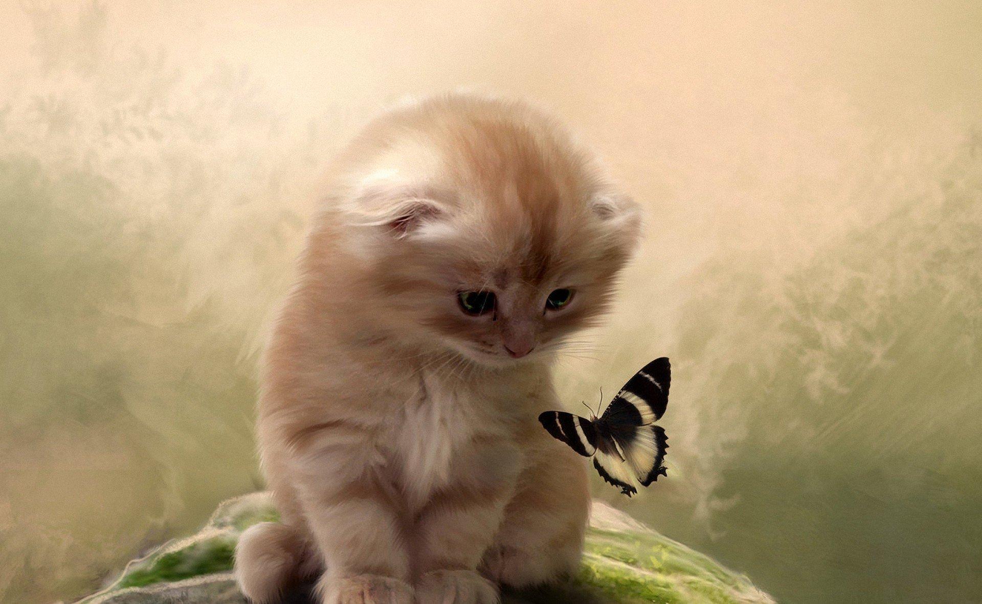 нужно картинки на телефон движущиеся животные кошки при фотоэффекте электромагнитное