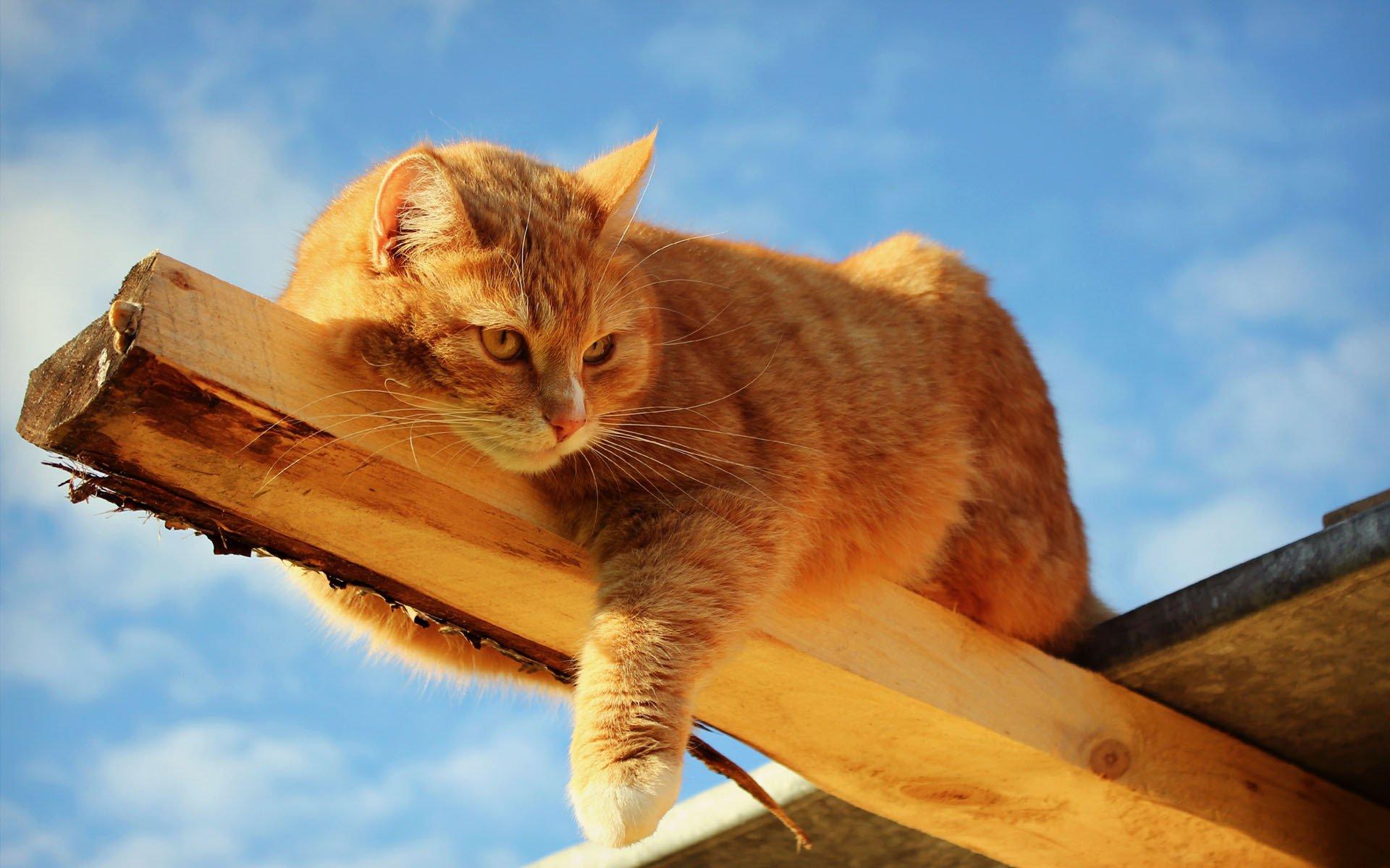 кошка солнце природа скачать