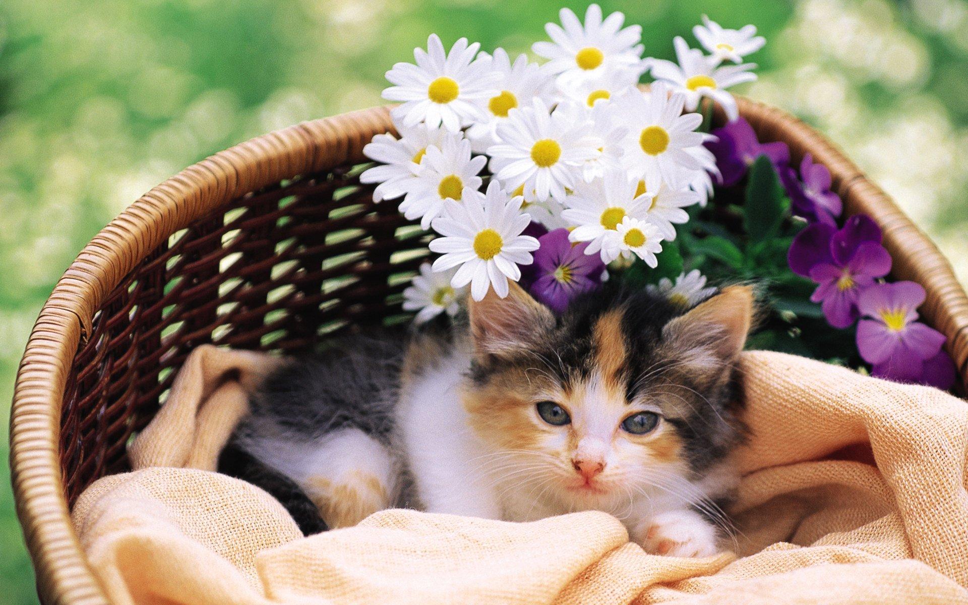 Открытка котик и цветы, любимому внуку