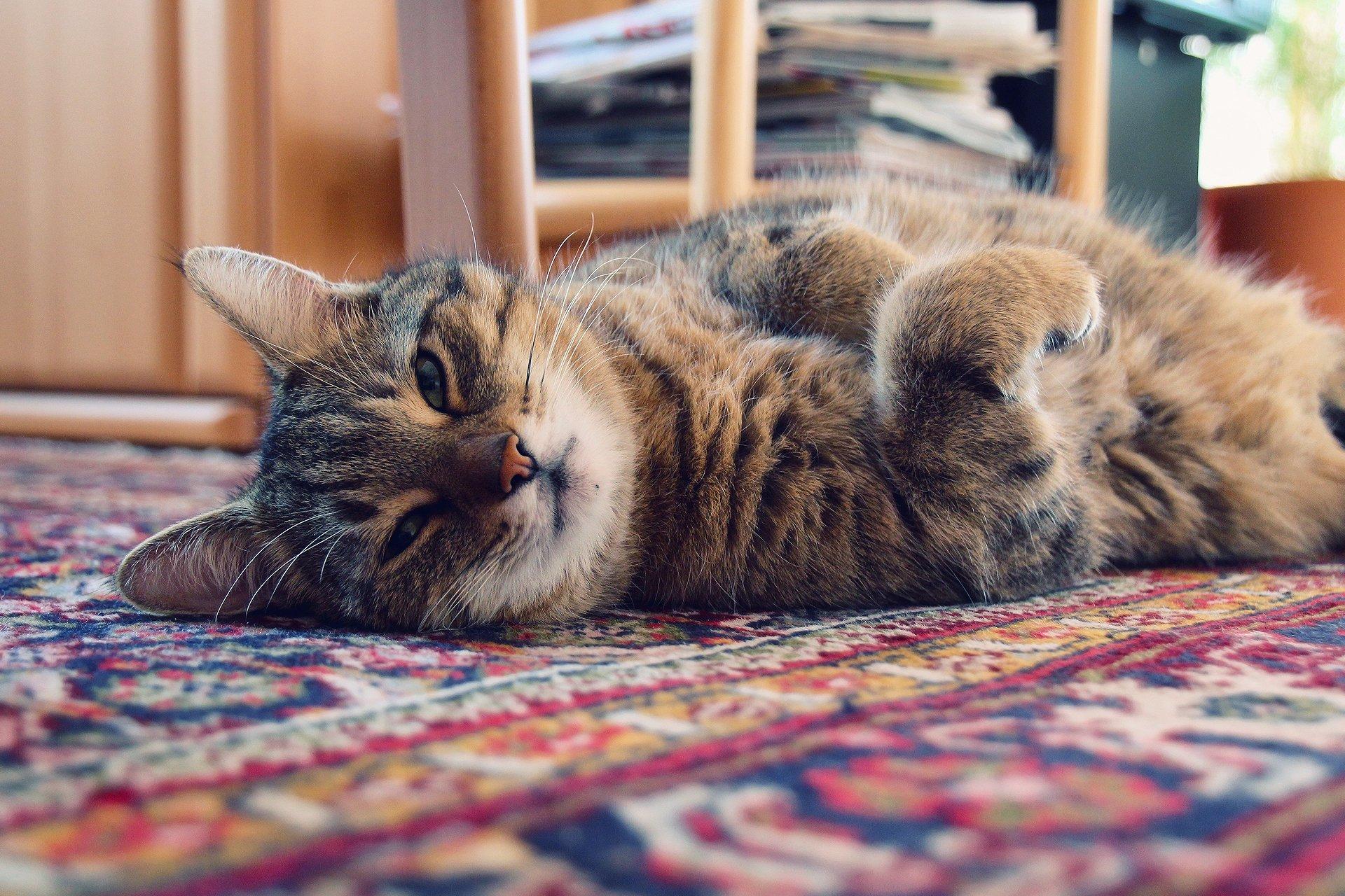 Уставший кот загрузить