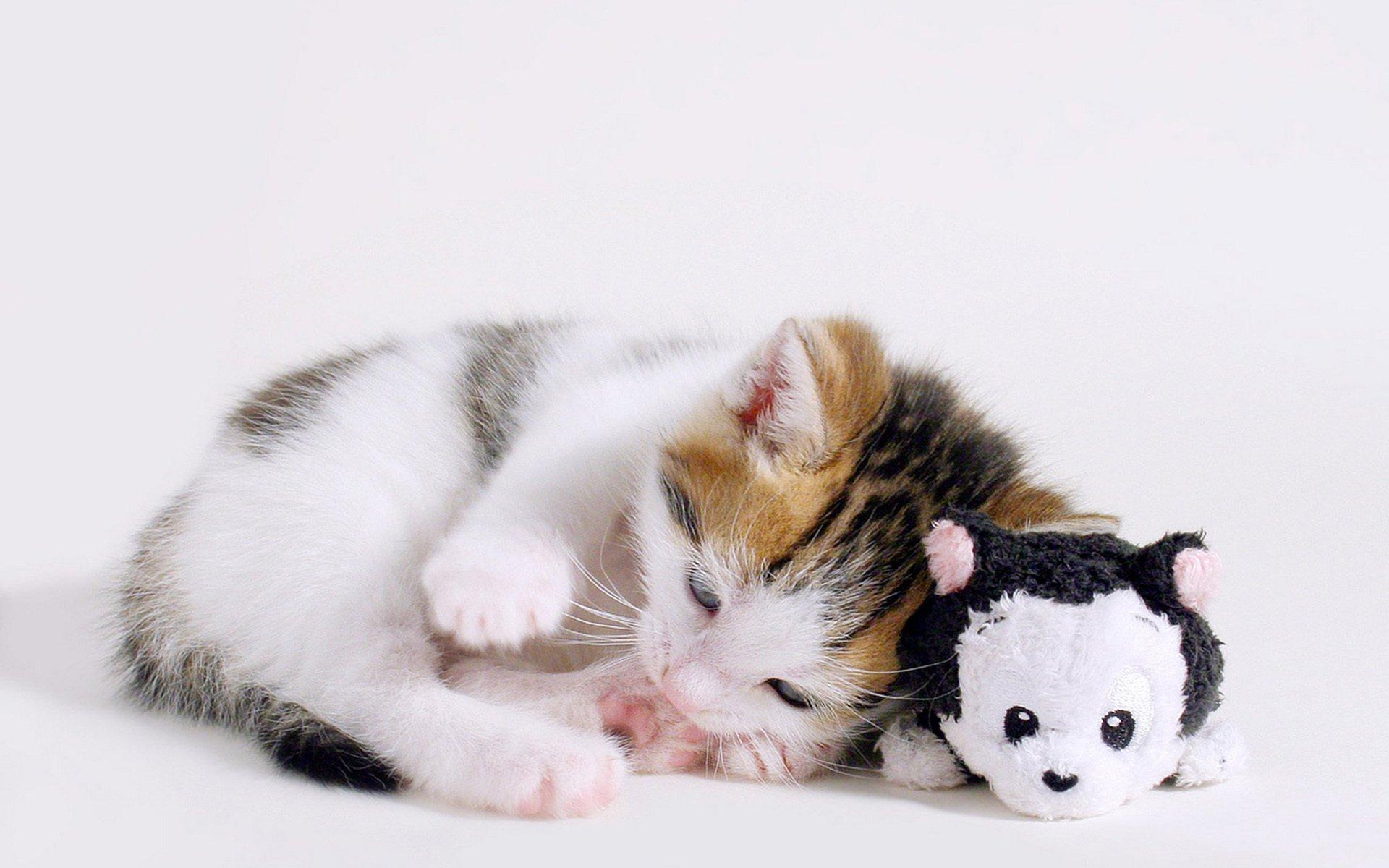 Кот с мягкой игрушкой загрузить