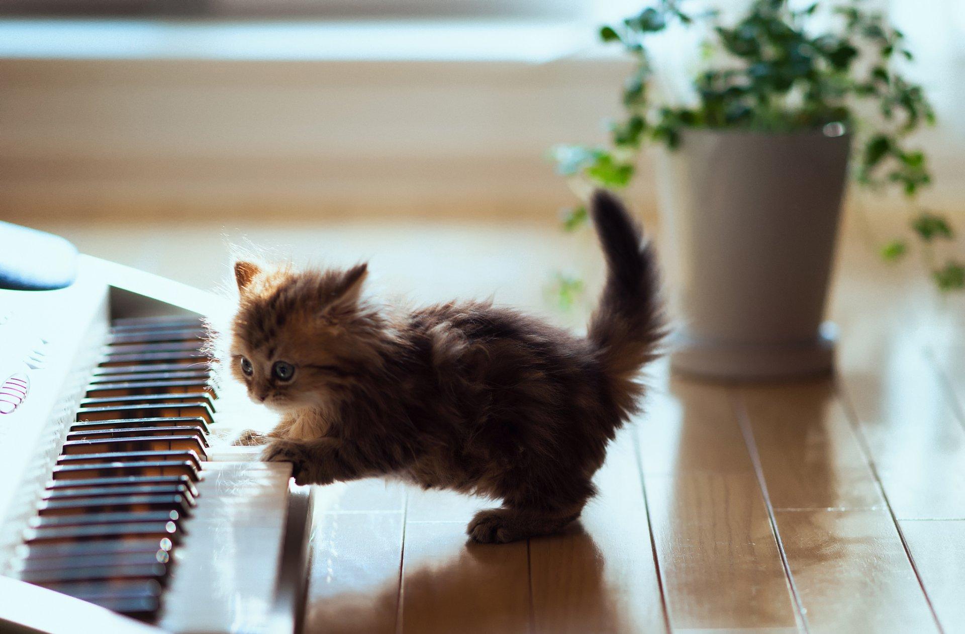 Для открытки, картинки с кошками для хорошего настроения