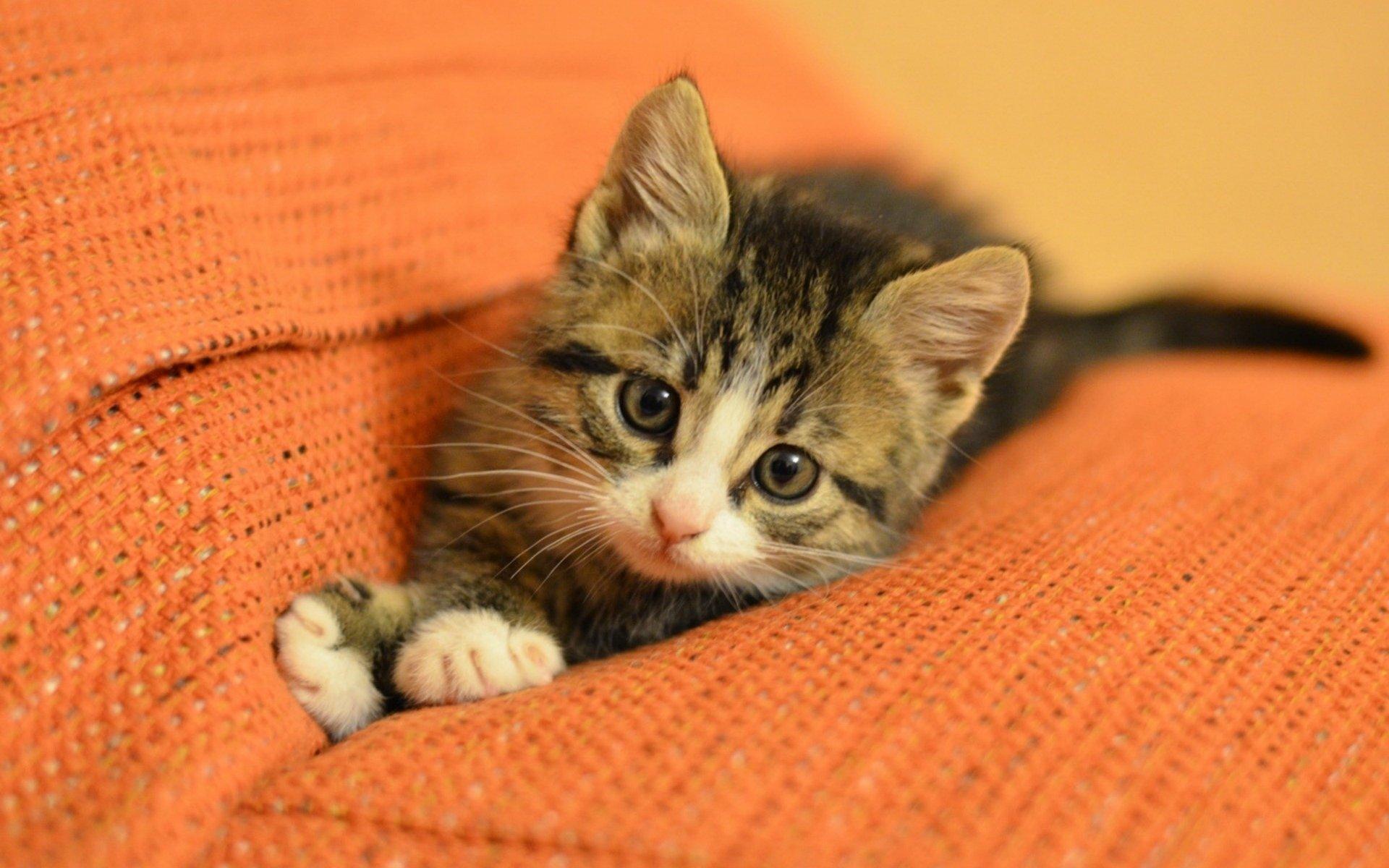 Котята мейн-куна только родились, но уже устали от этой жизни | 1200x1920