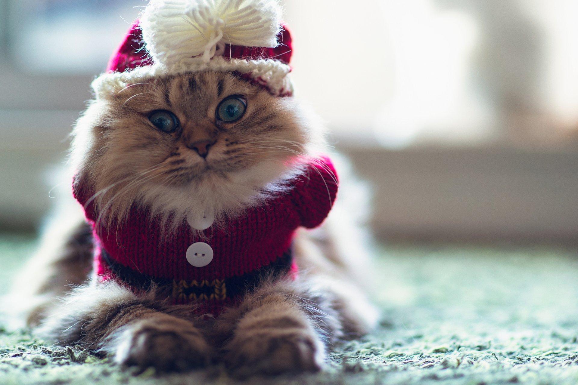 фото на аву животные красивые кошки следующий день