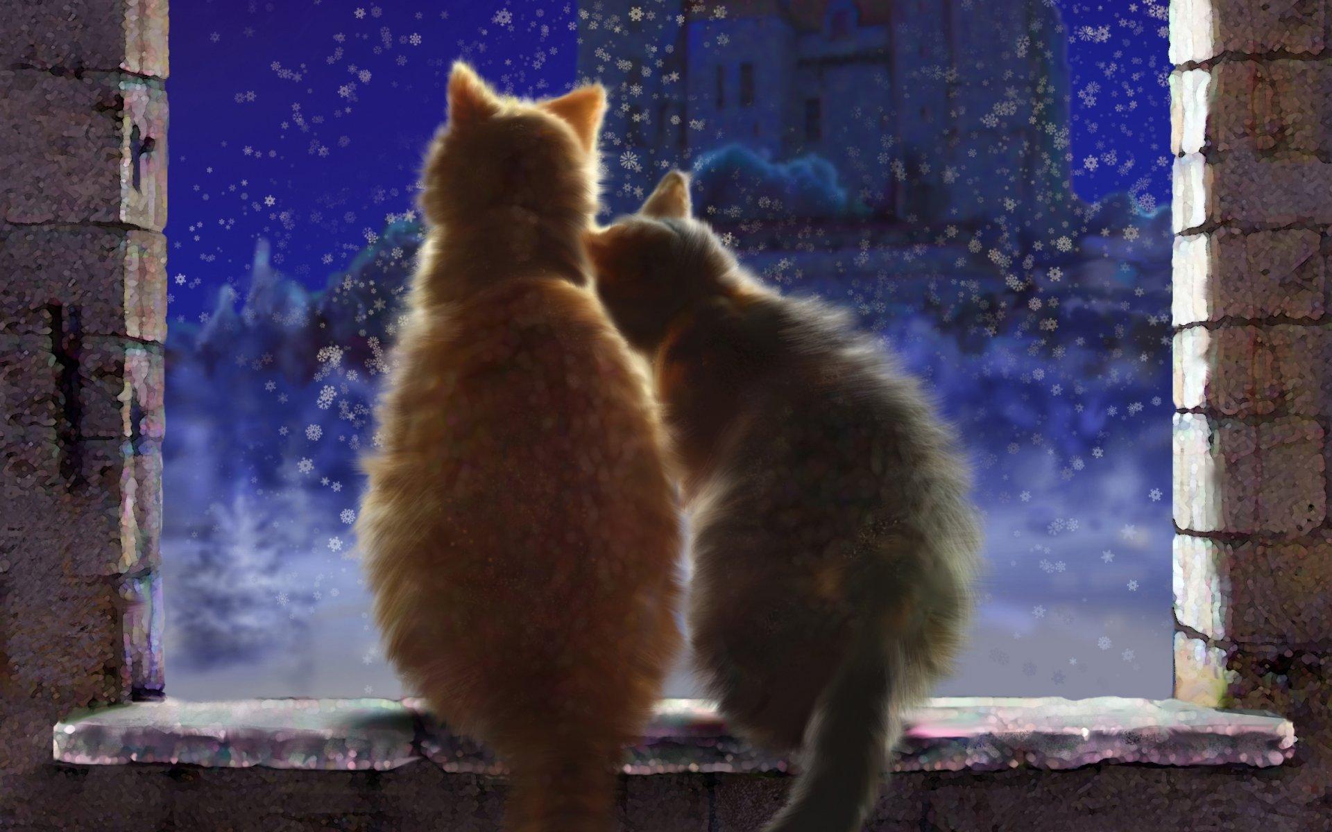 Картинки с котом и кошкой любовь