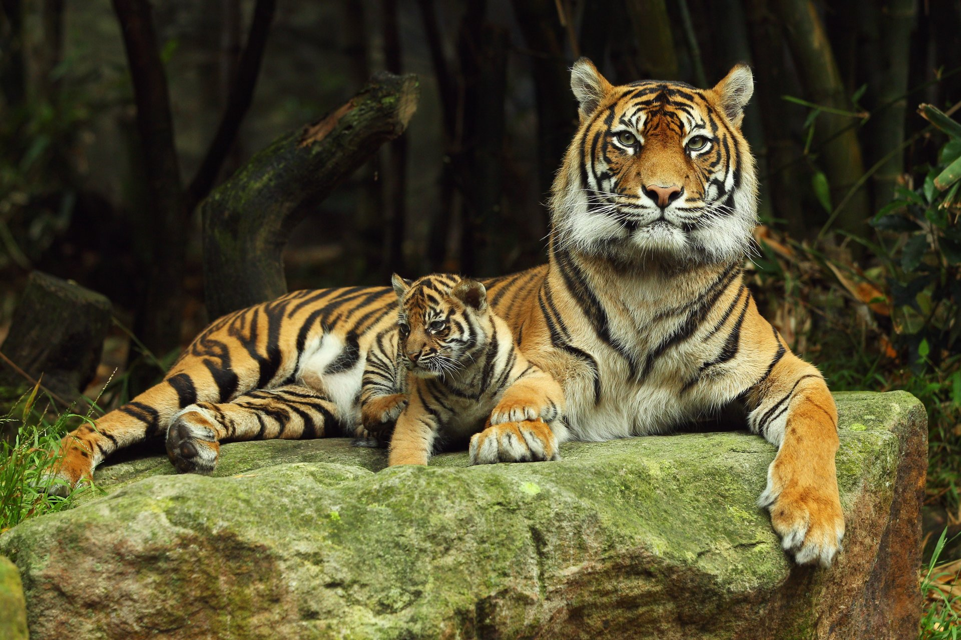 Картинки животных на обои для телефона
