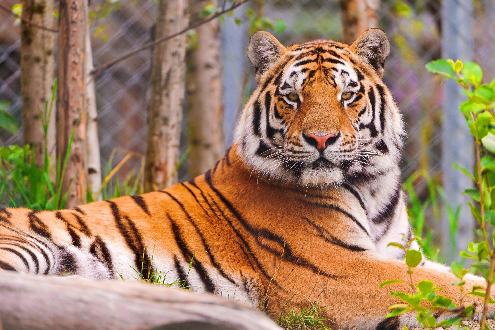 Обои портрет, морда, красавец, грива, кошки, дикие кошки, смотрит вверх, лев. Кошки foto 14