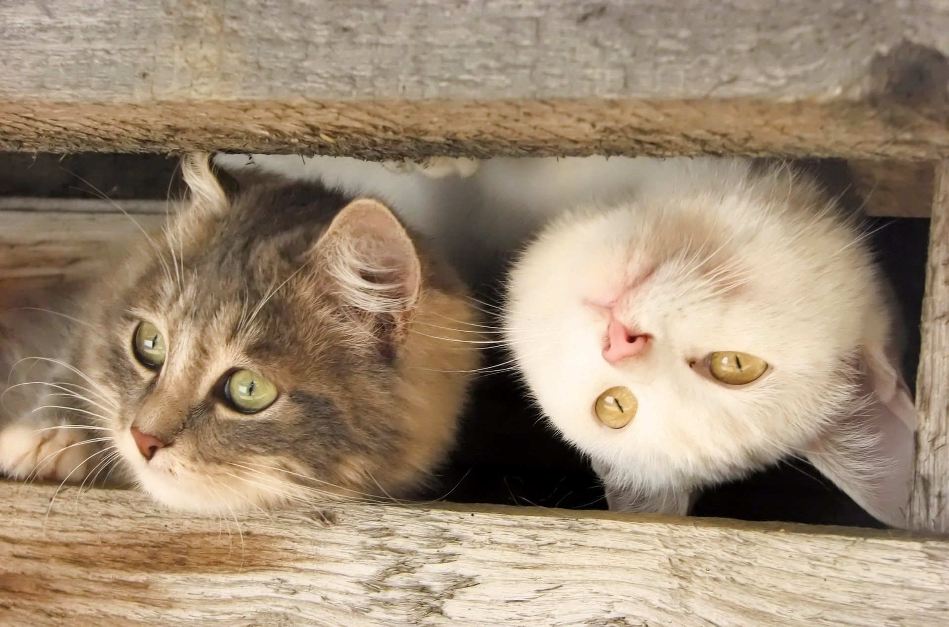 Приколы с котами и кошками в картинках
