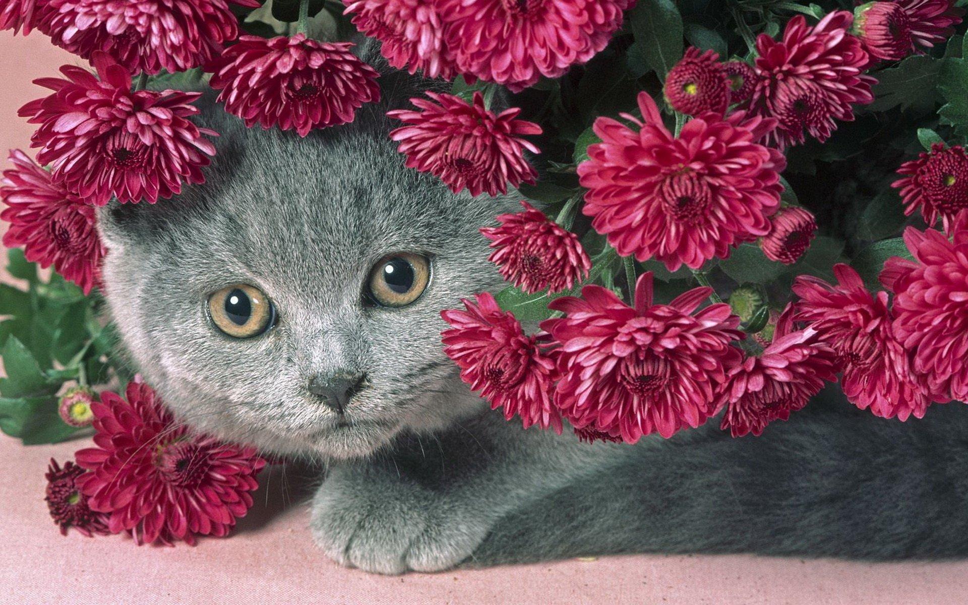 Дня, открытки цветы с животными