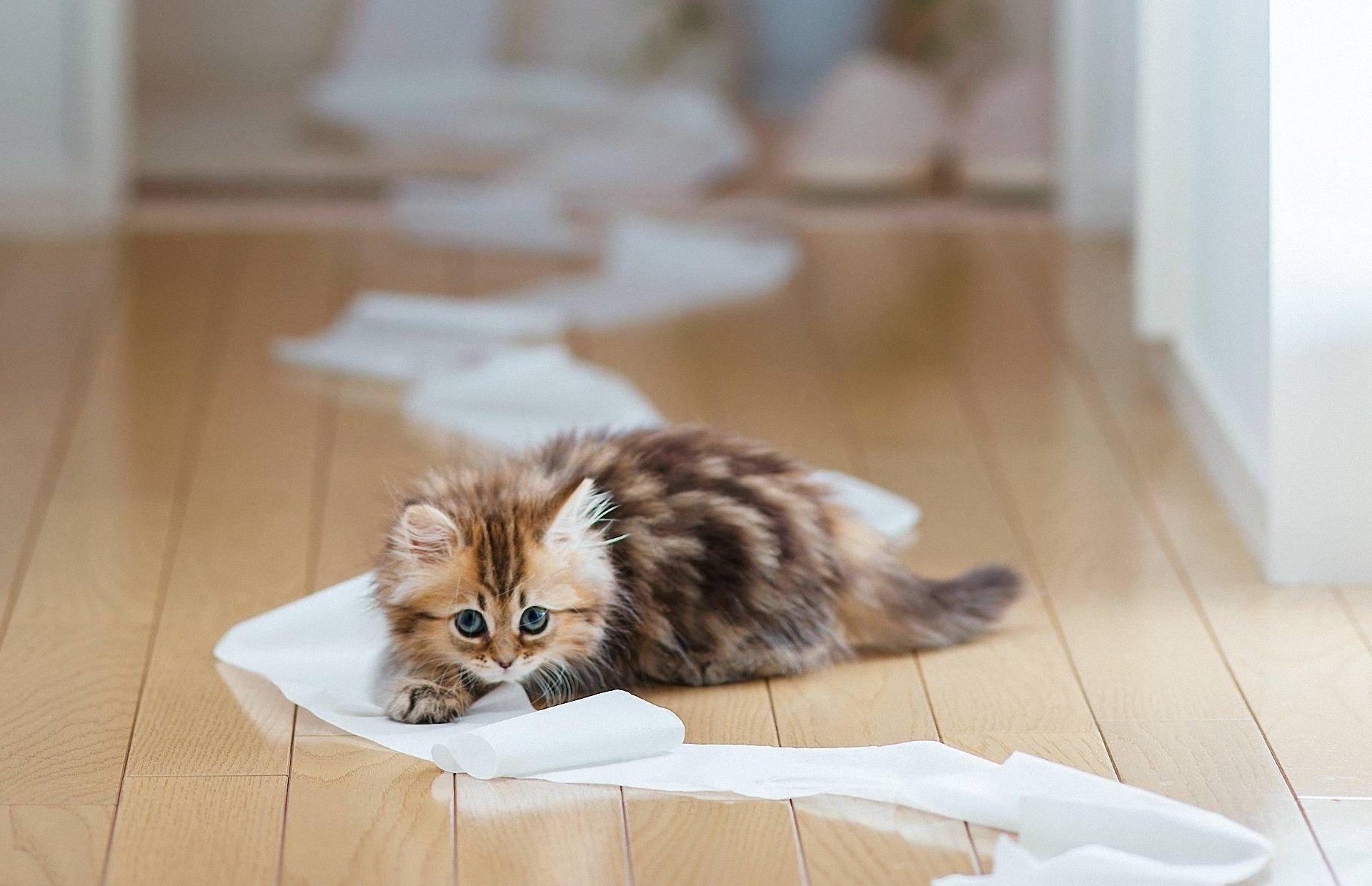 do cats pee on the floor