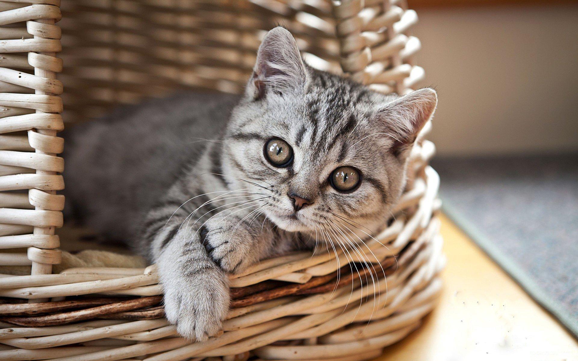 фредди красивые коты на обои как