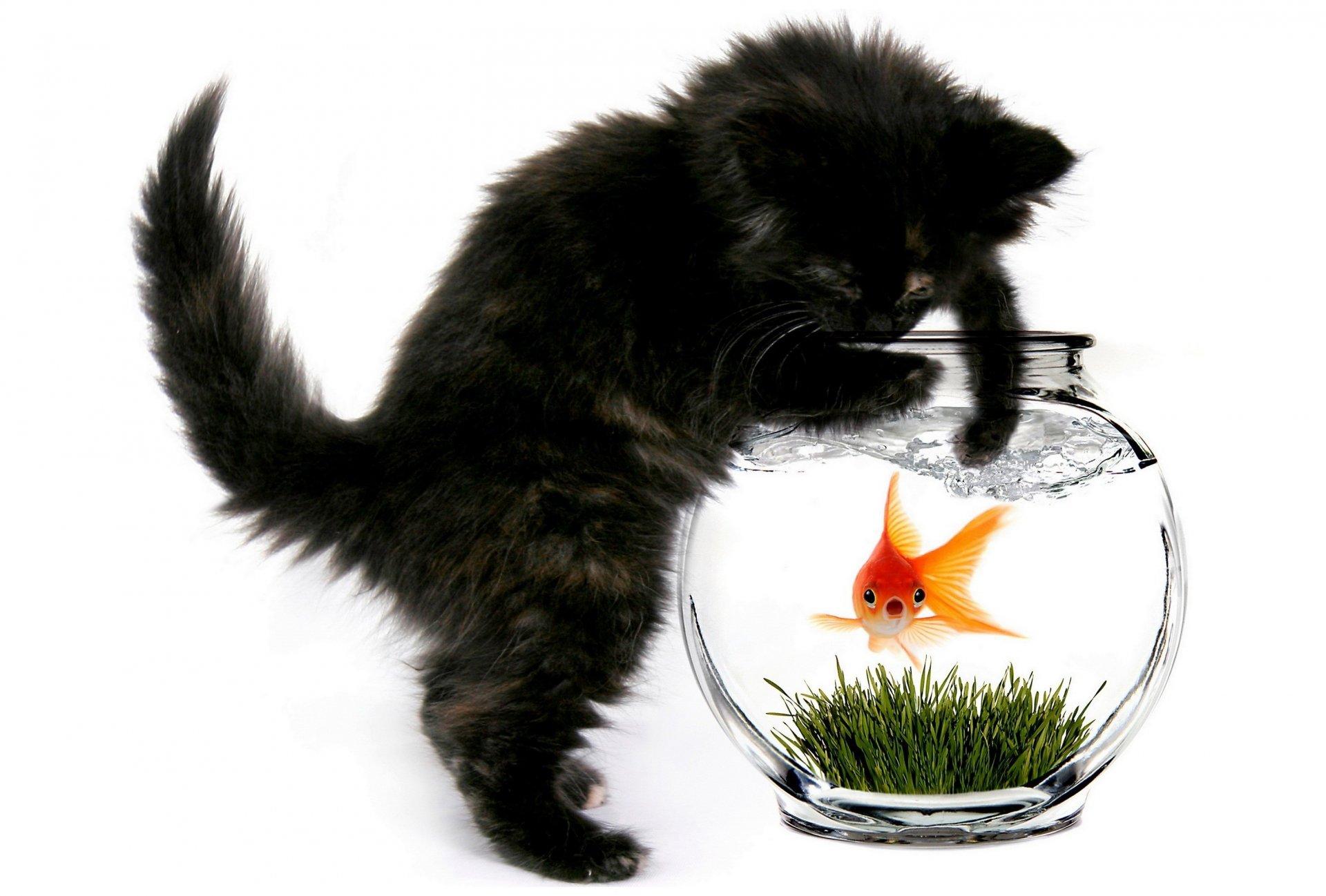 Картинки кот с аквариумом