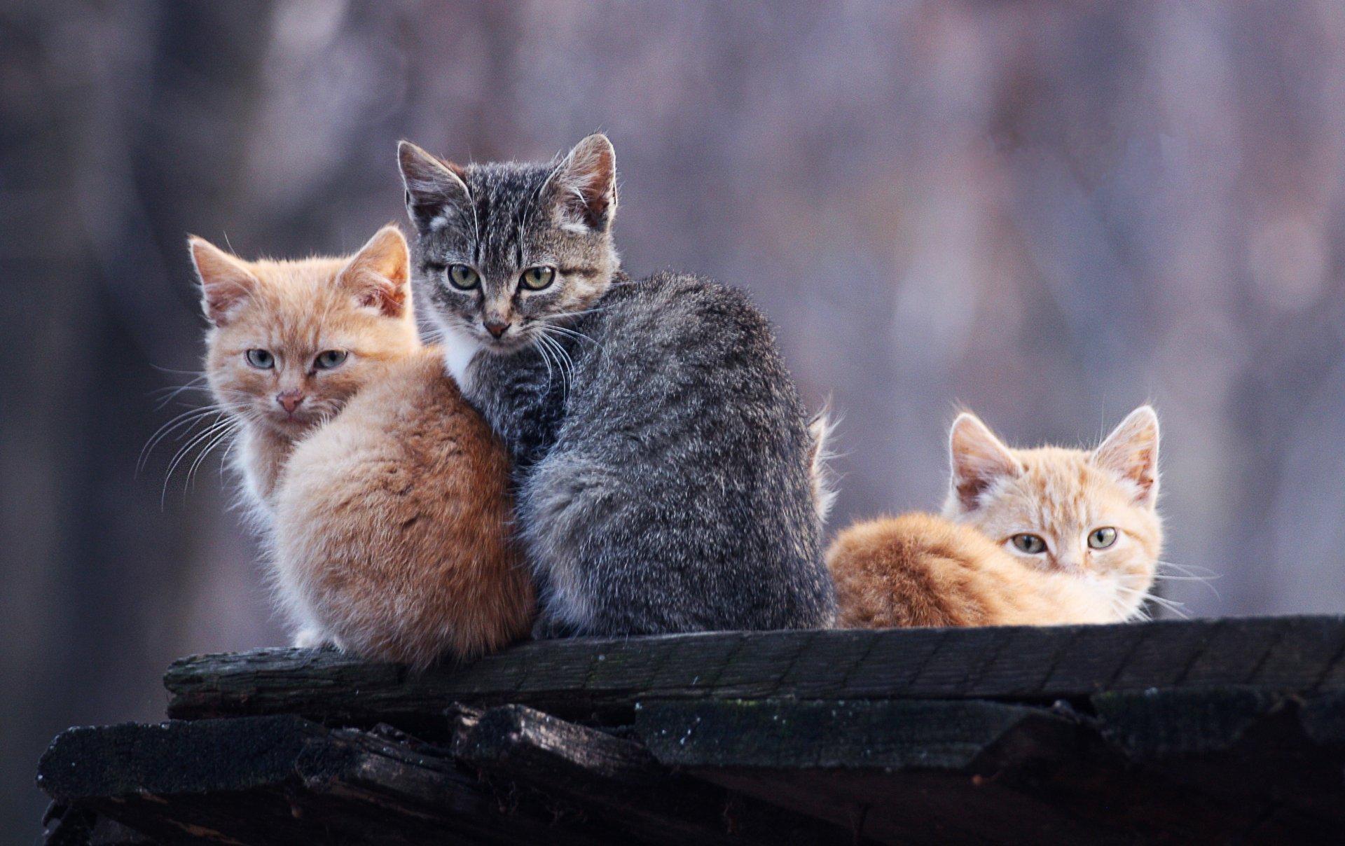 пребывания картинки рыжего и серого кота открываете