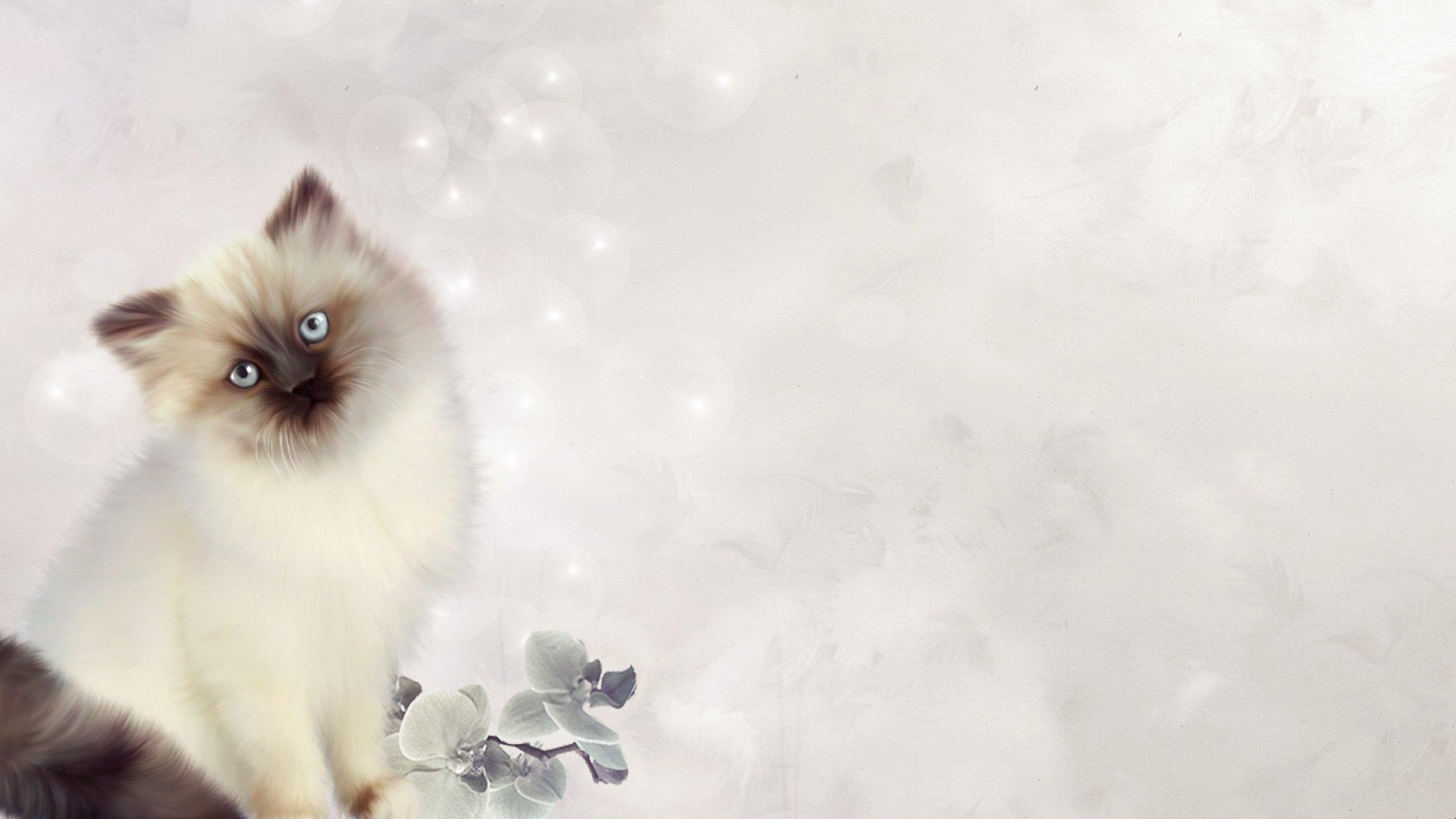 Карикатуры смешные картинки тайских котиков момента