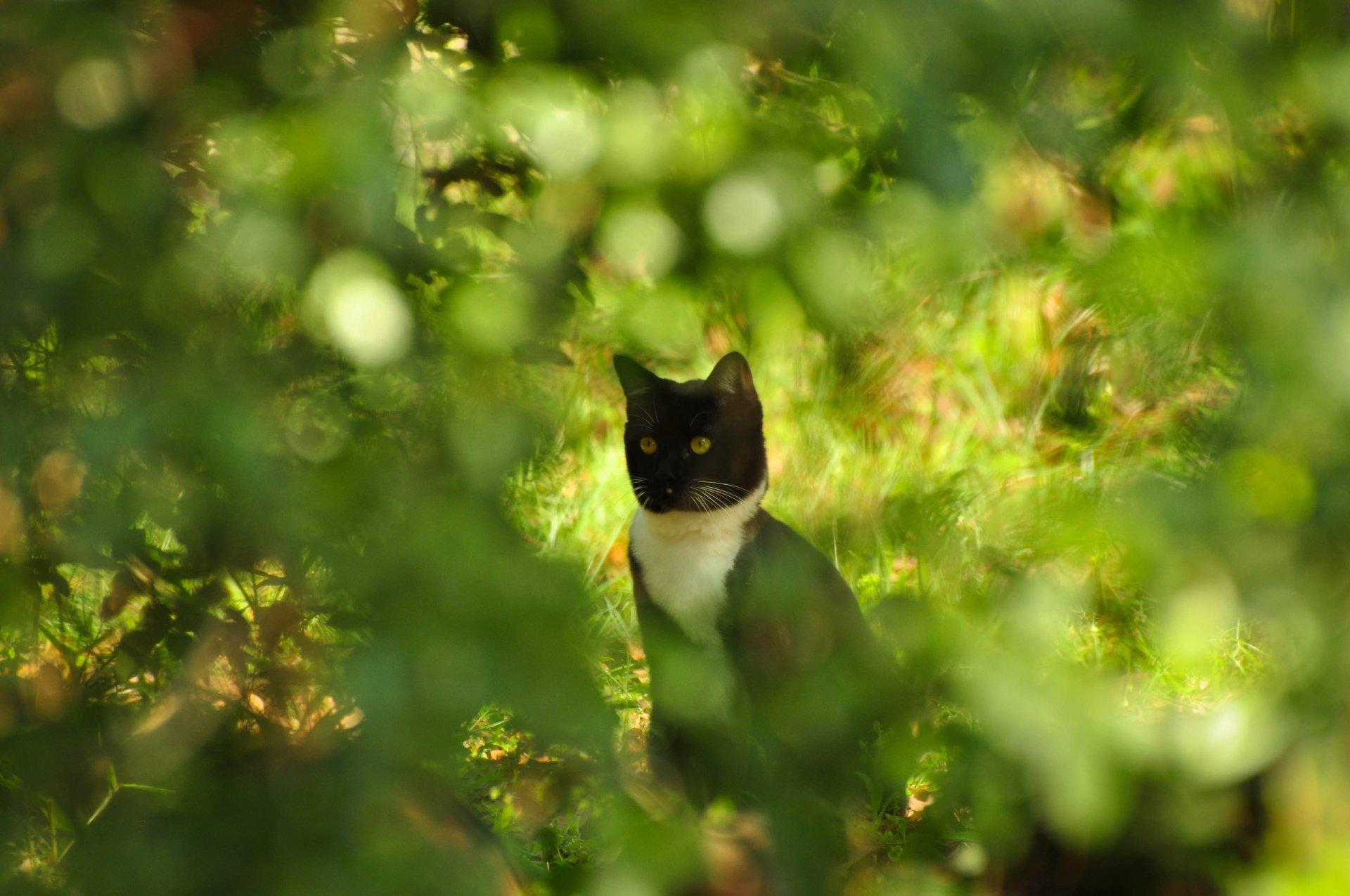 смешные коты фото — www.wday.ru | 1275x1920