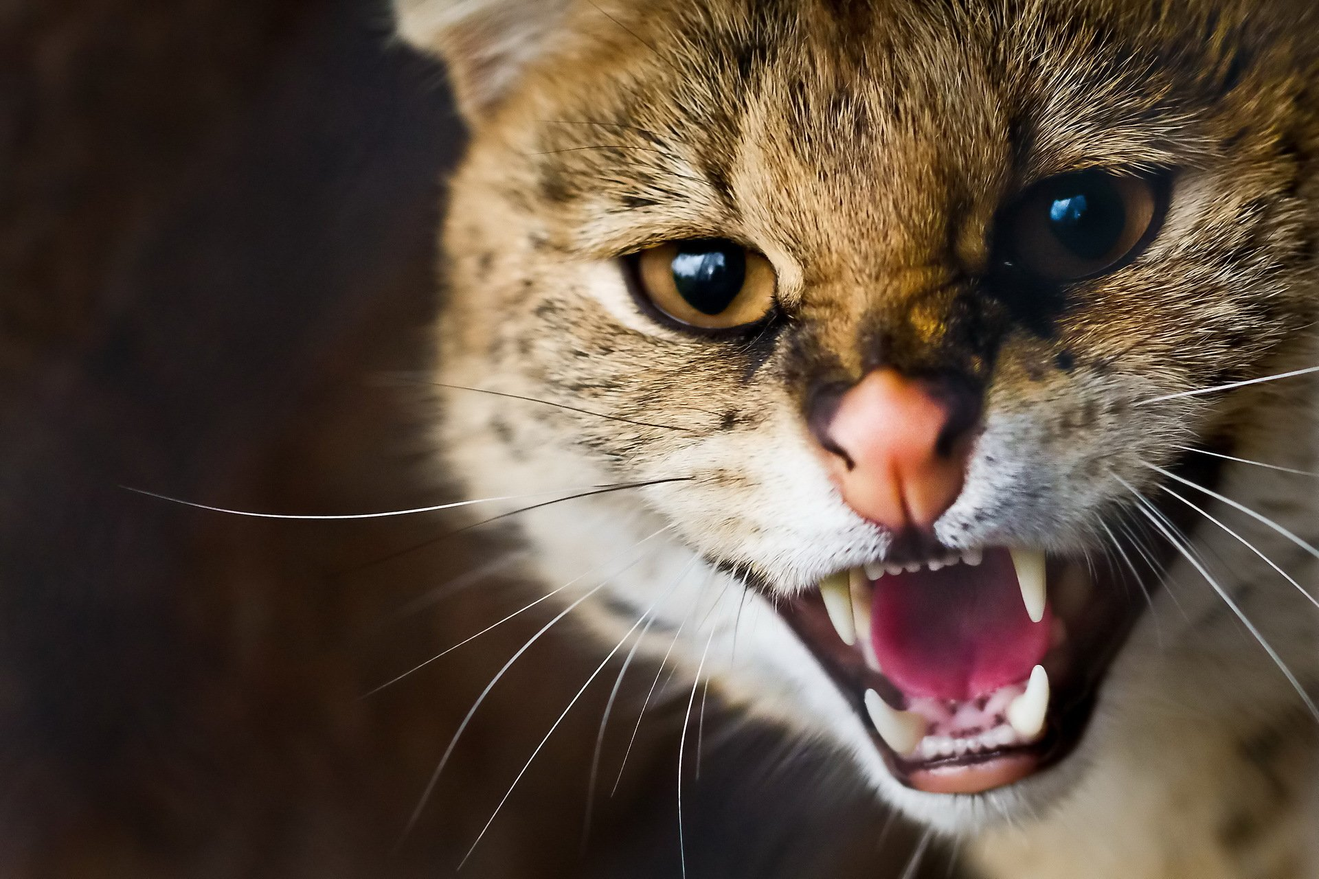 Картинки животных кошек диких