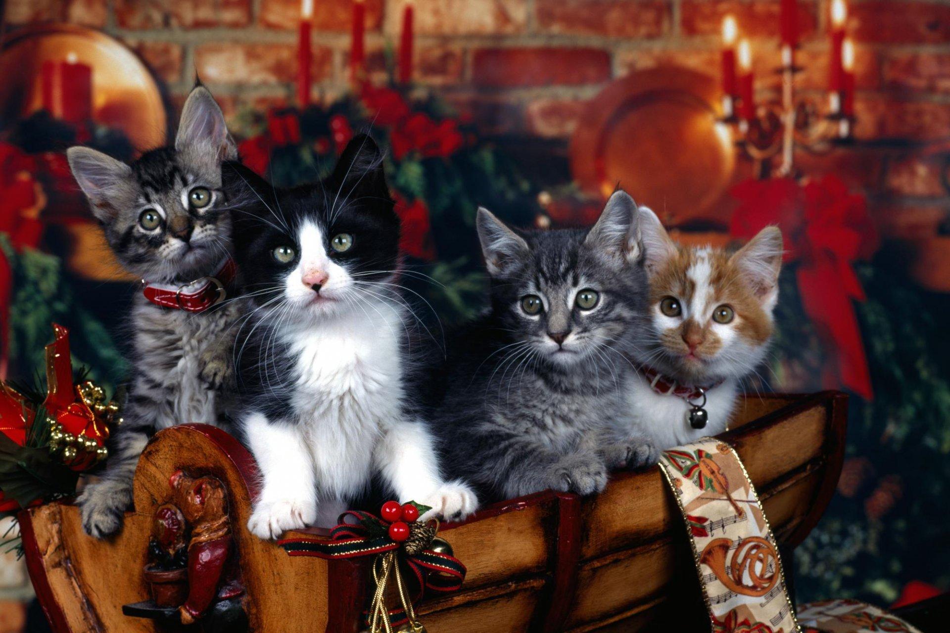 Открытка это, открытки с новым годом и с котами