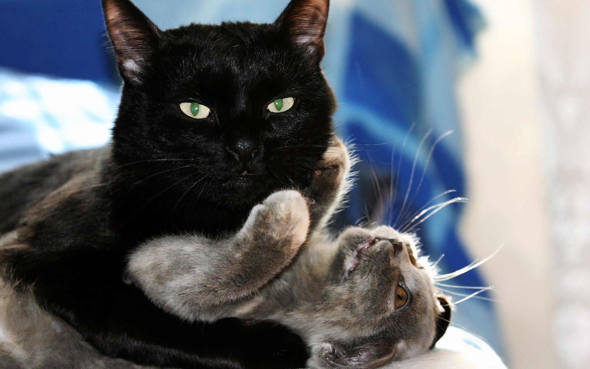Игры кот и кошки и котята