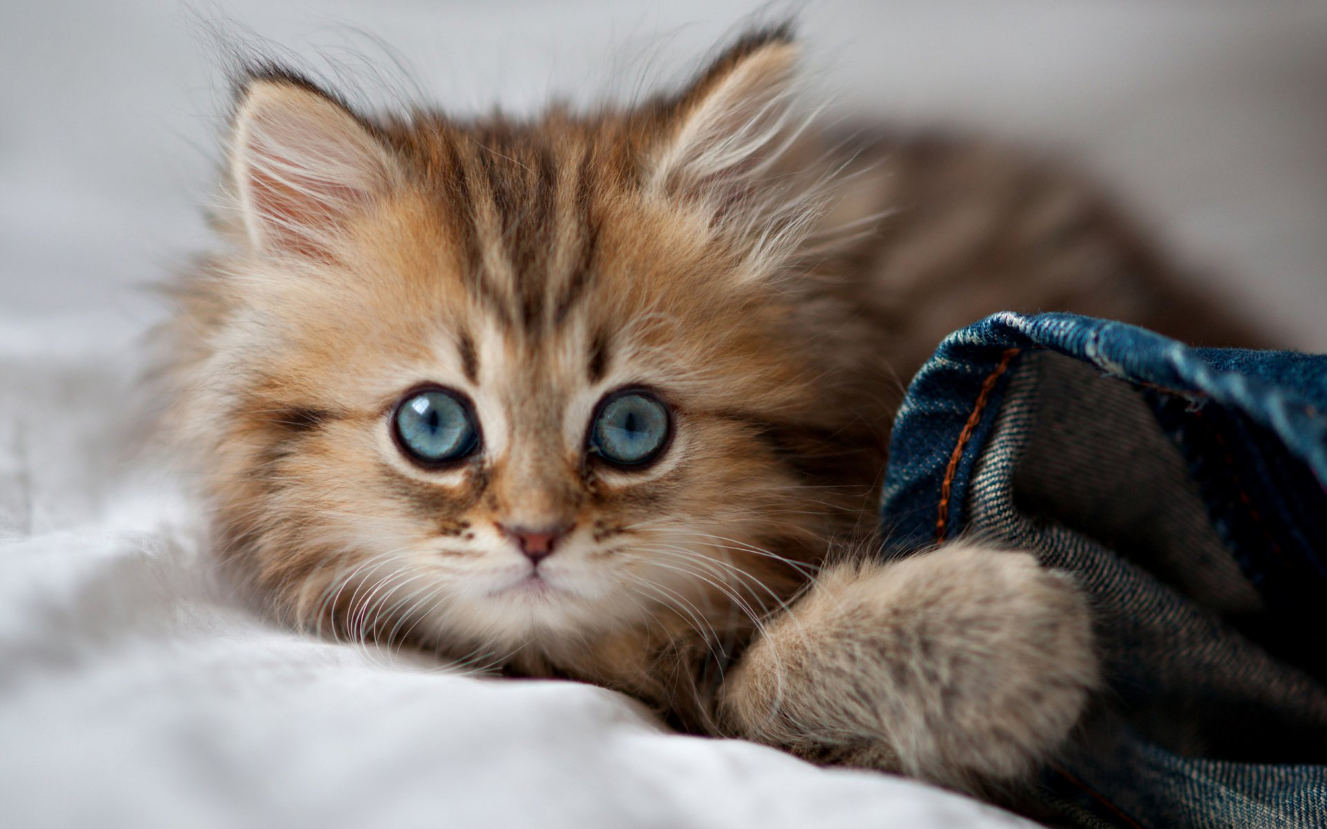 Картинки кошки для обоев