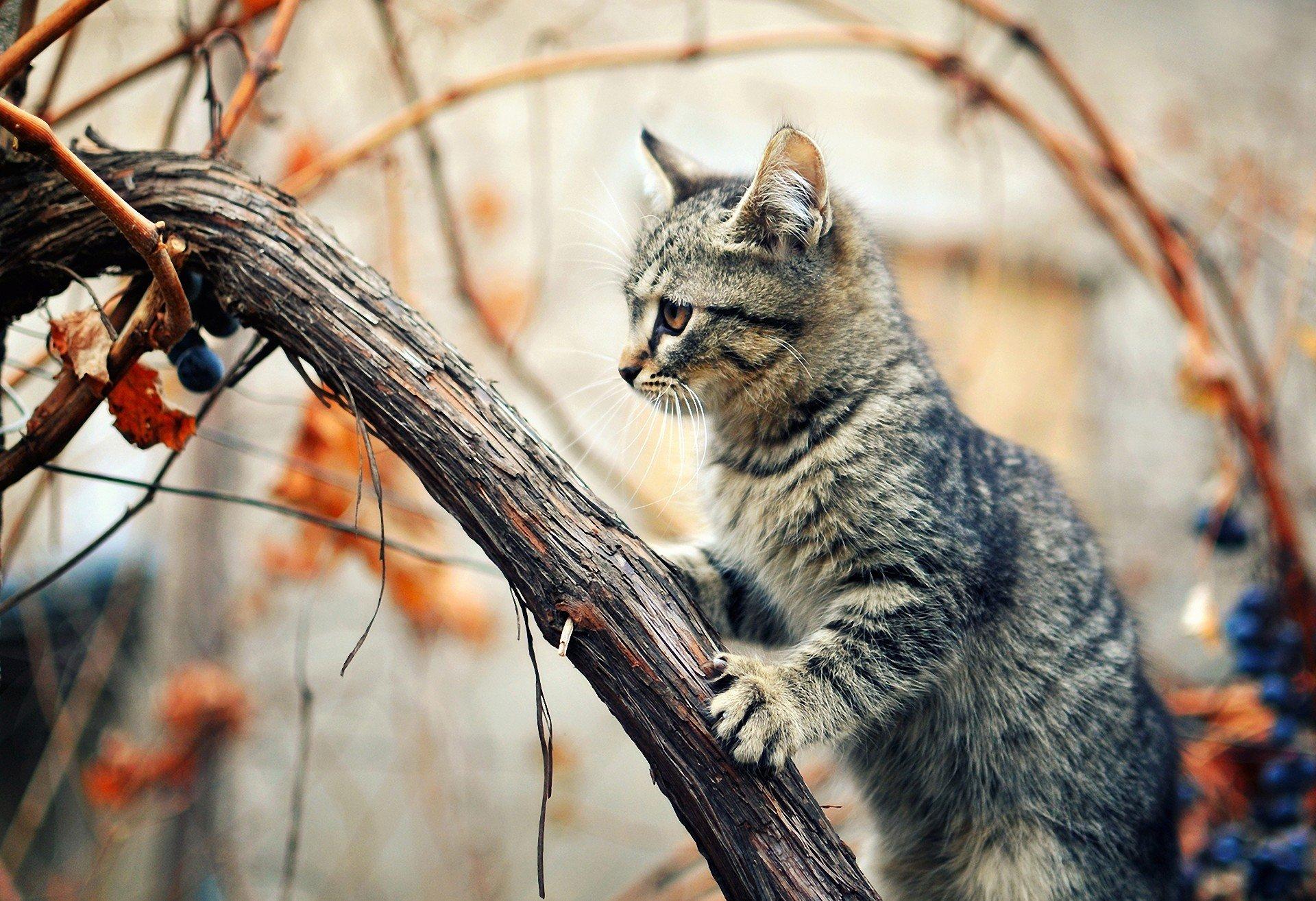 природа животные кролик листья осень деревья  № 2035256 загрузить