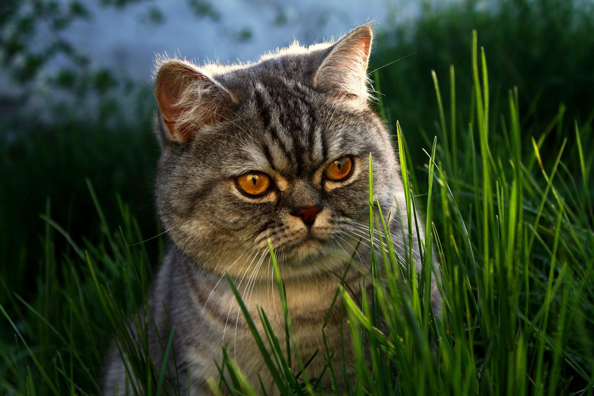 Февраль открытки, смешные картинки с кошками на заставку