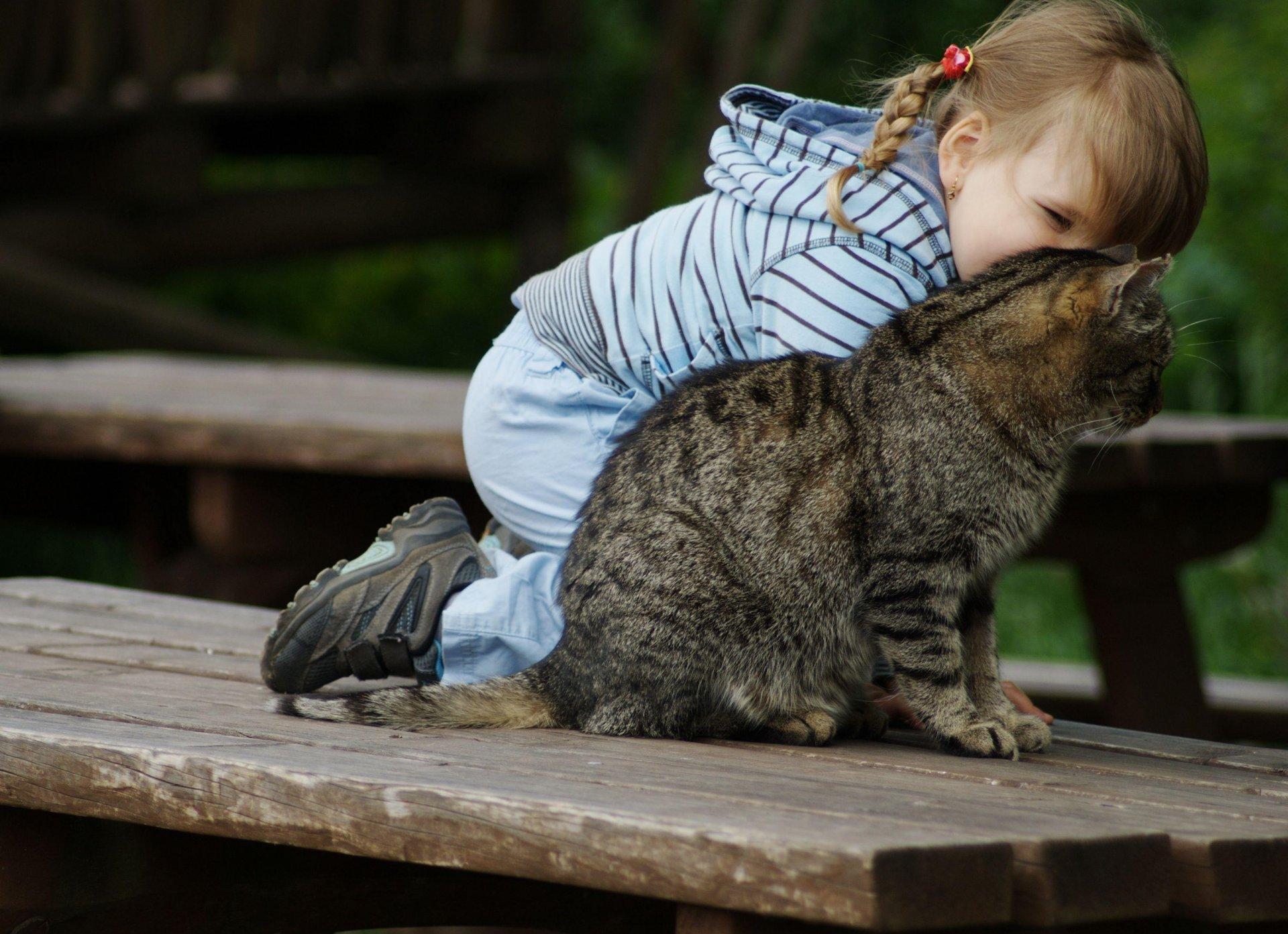 картинки кошки и малыши потребителю, привыкшему