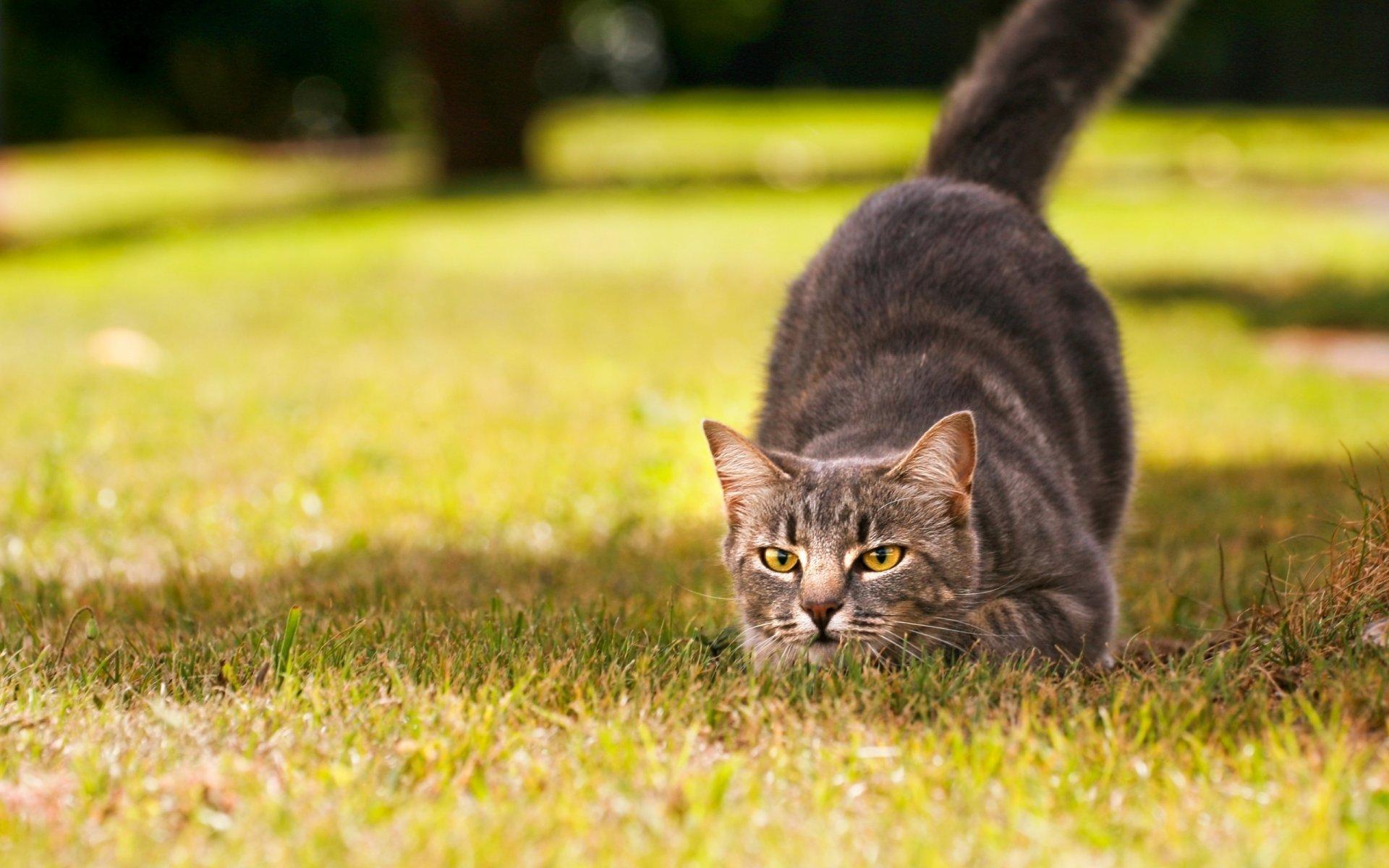 естественной фото домашних котов на природе великана уникальный