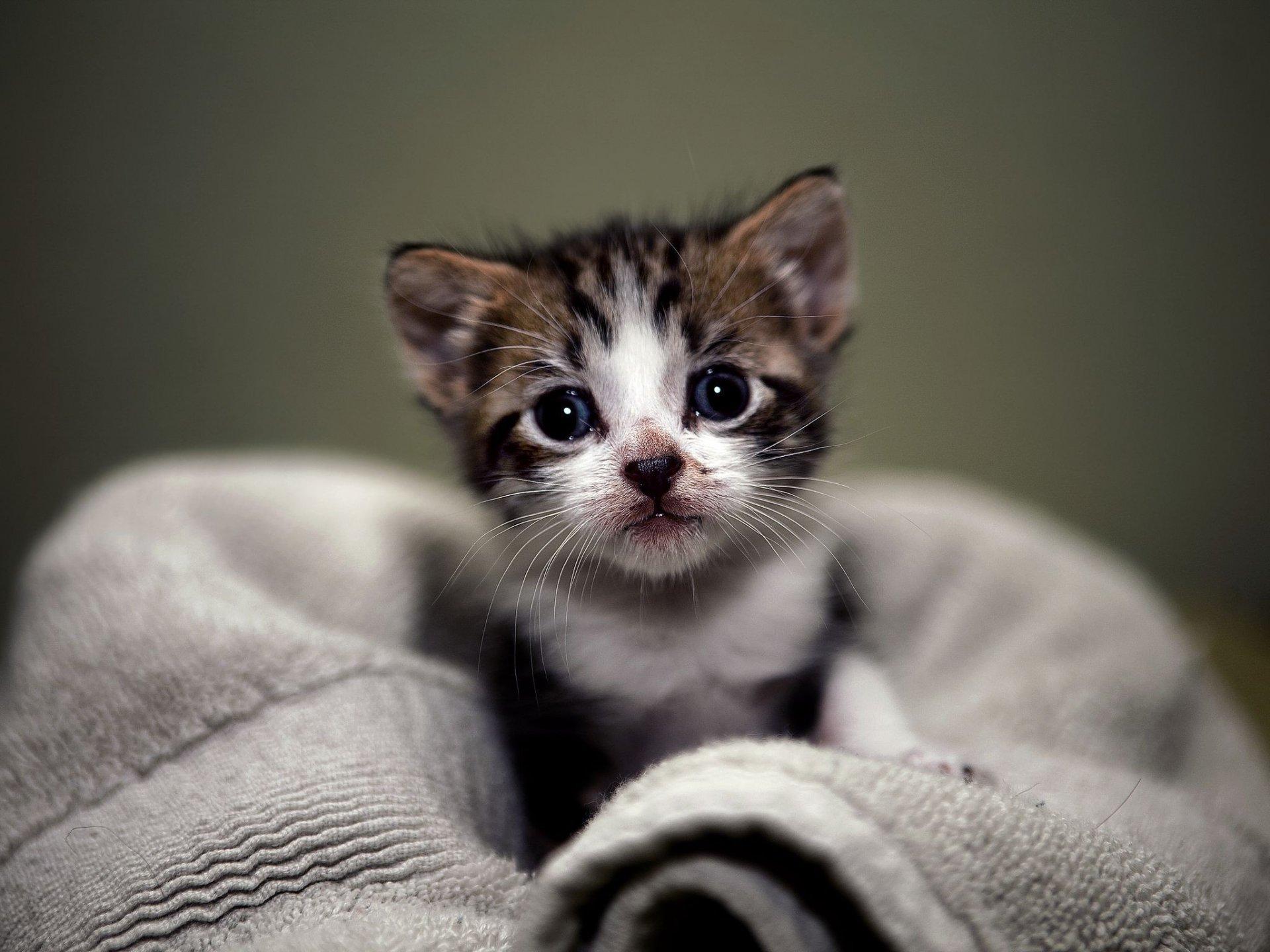 Открытка днем, прикольные картинки маленьких котят